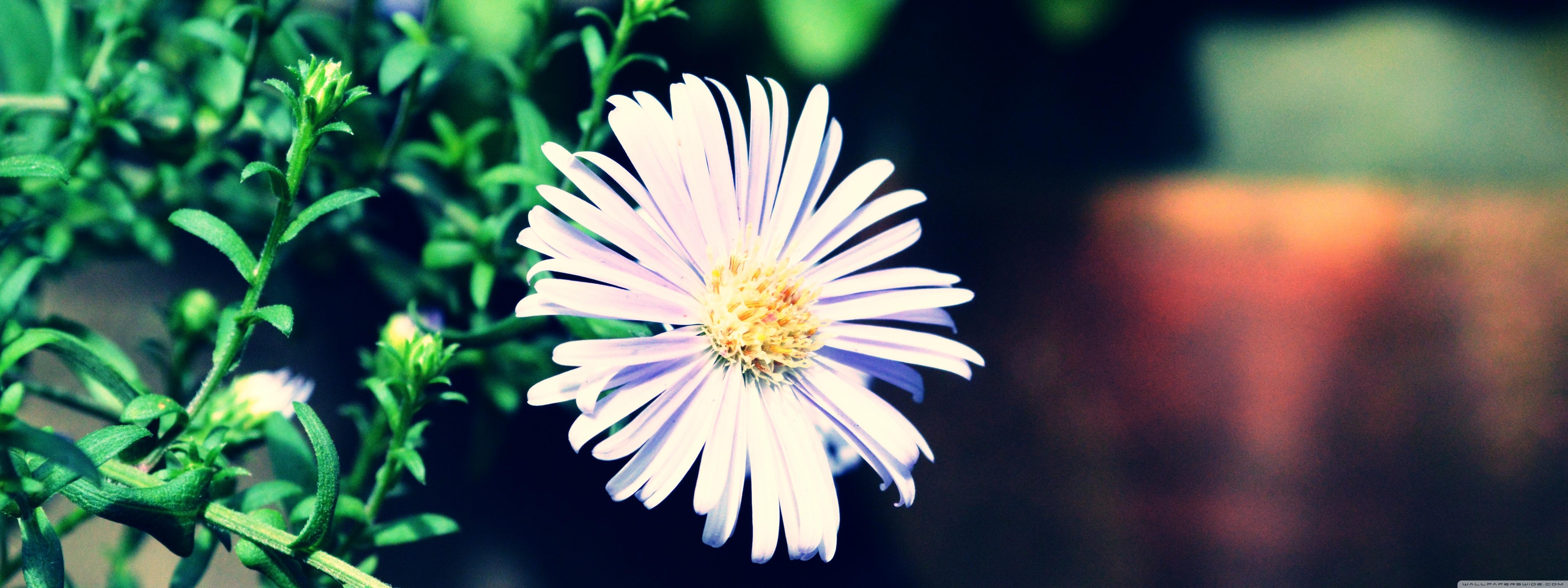 Download Free WallpaperViolet Flower