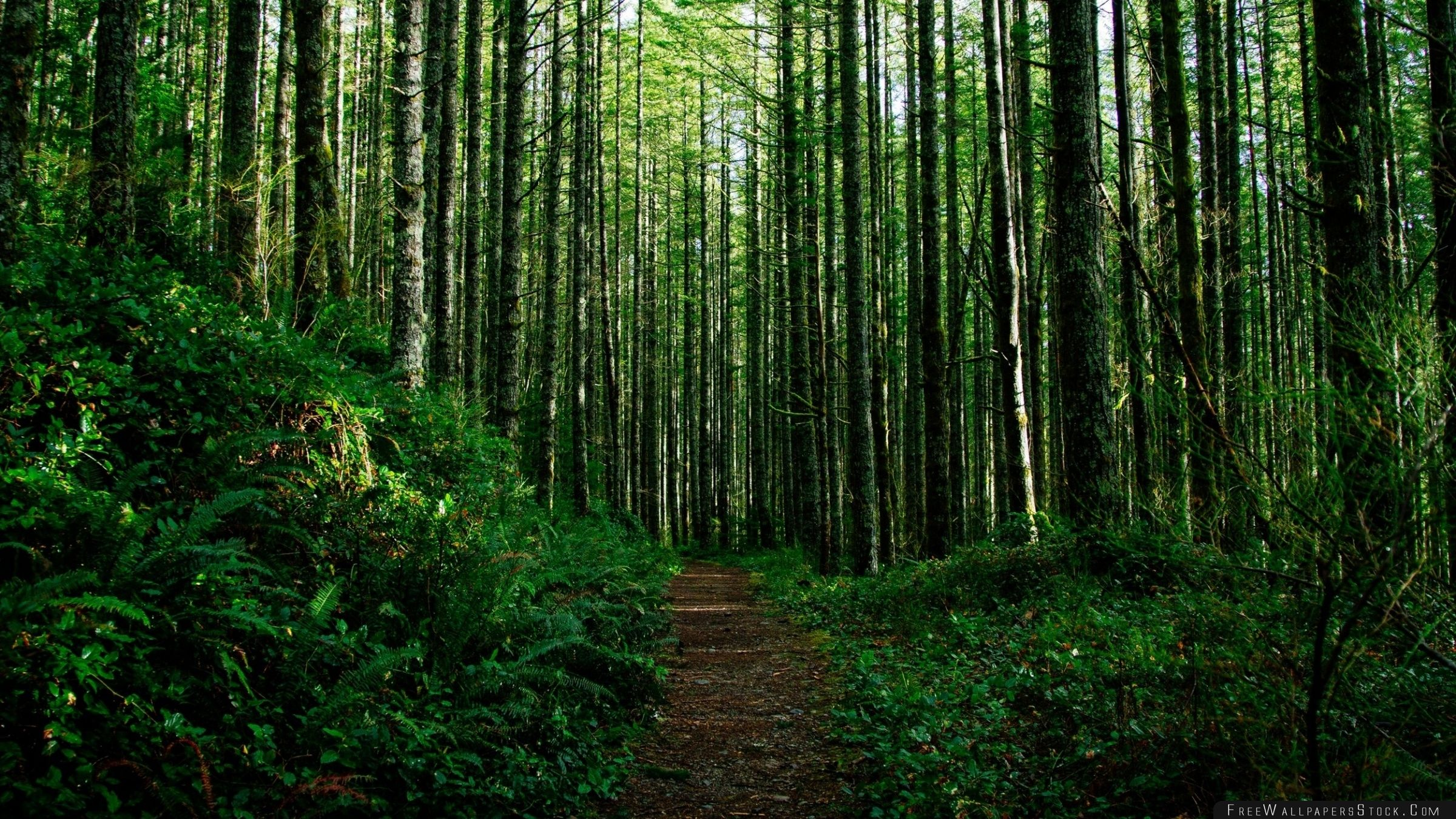 Download Free Wallpaper Path Through The Forest