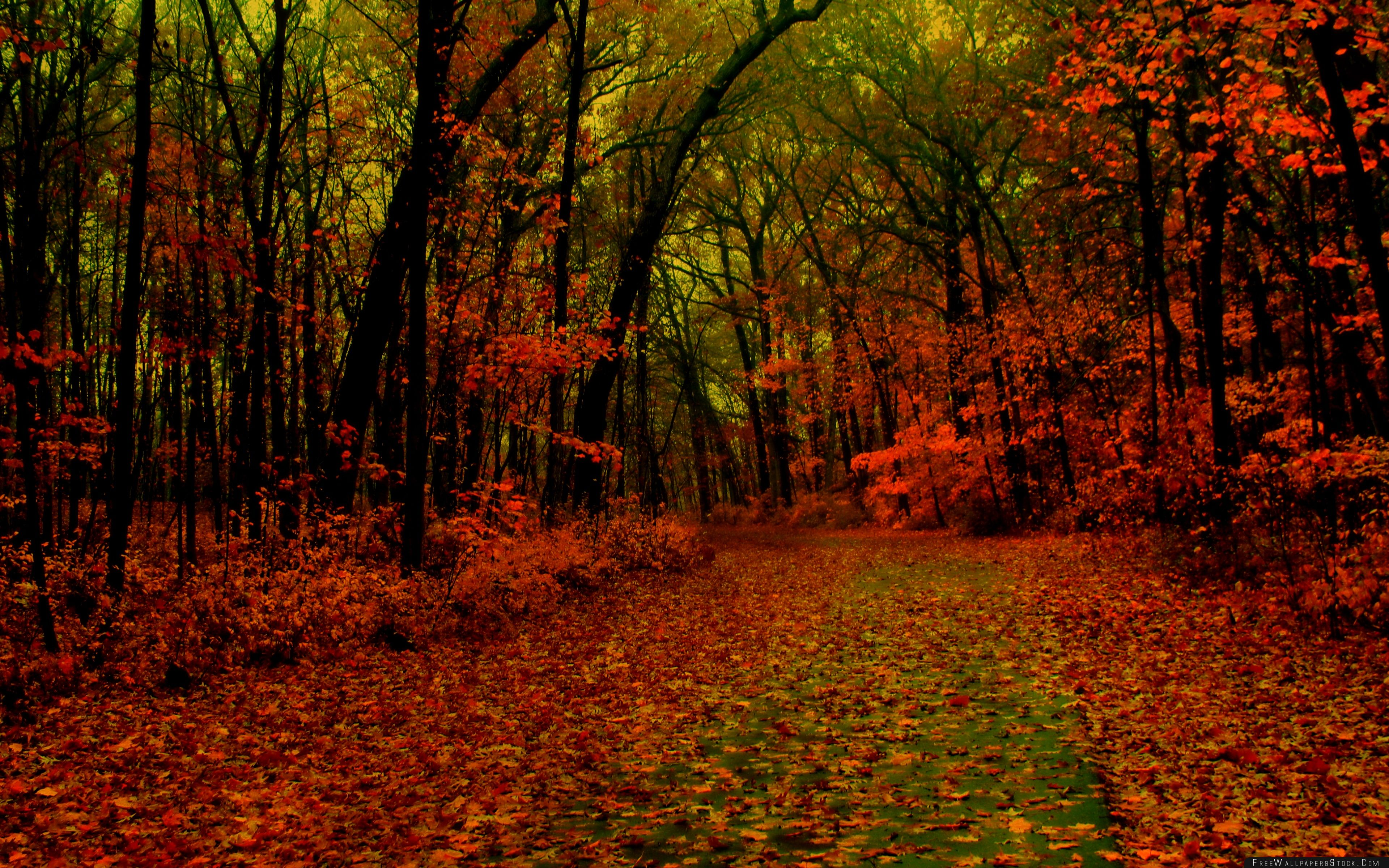 Download Free Wallpaper Red Forest