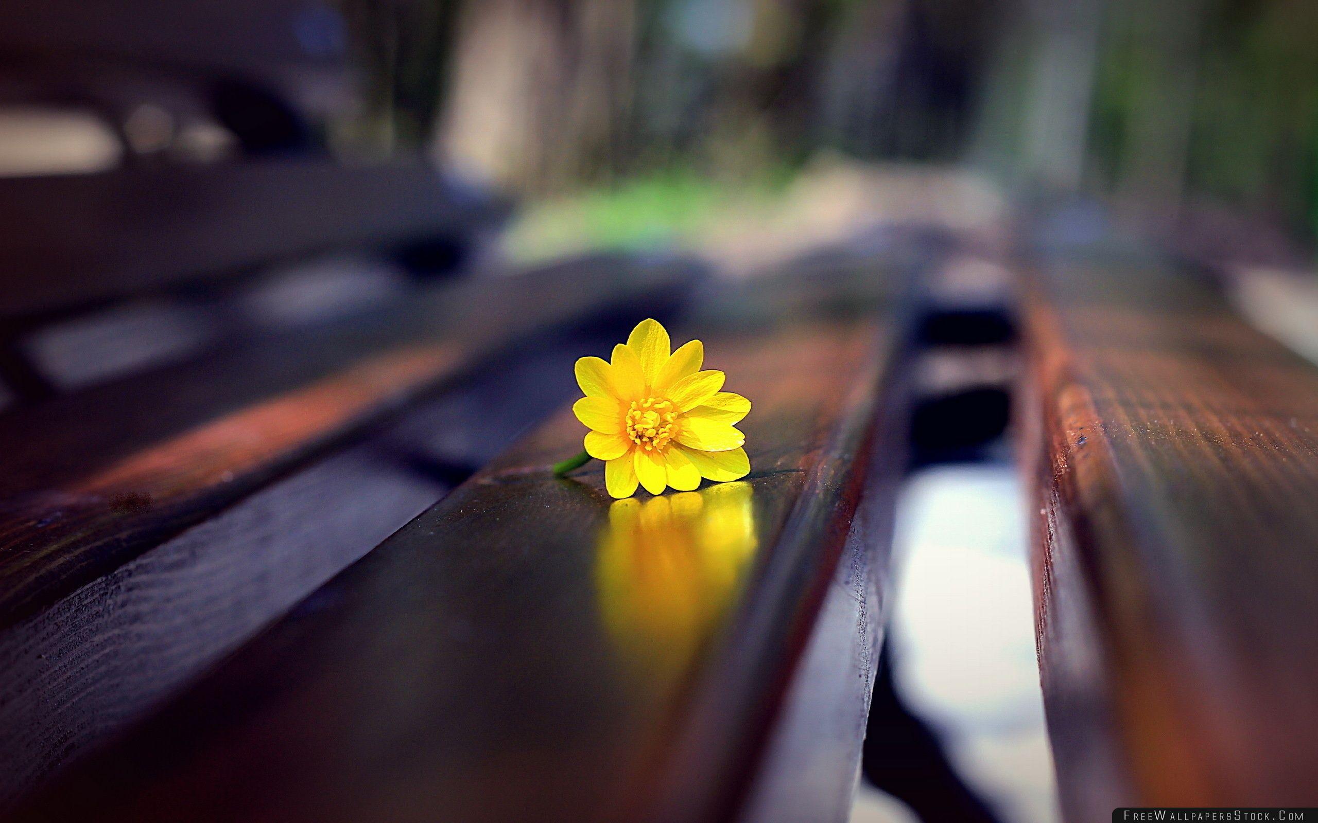 Download Free Wallpaper Romantic Bench