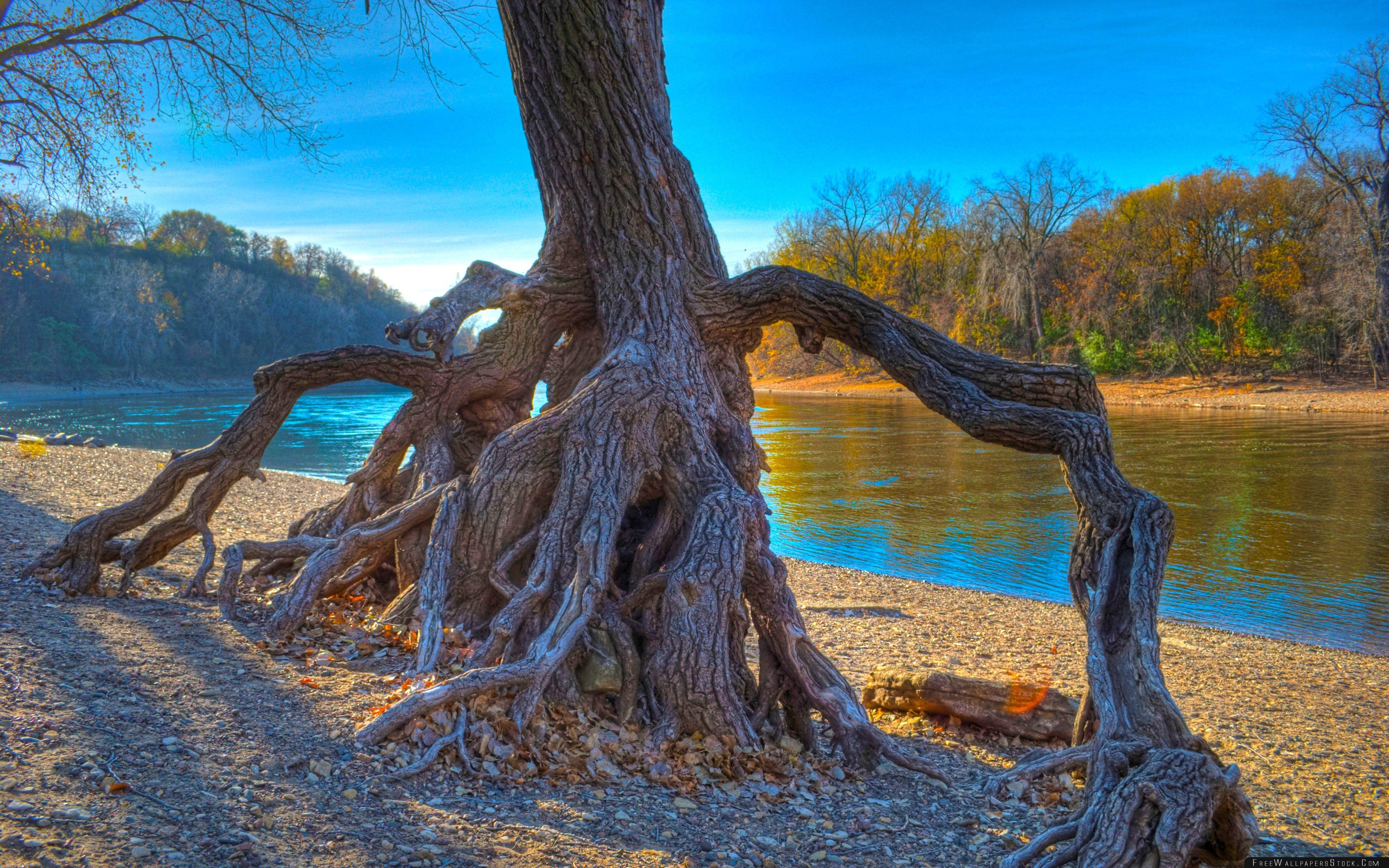 Download Free Wallpaper Rooted Mississippi River   Hidden Falls Park Saint Paul Minnesota