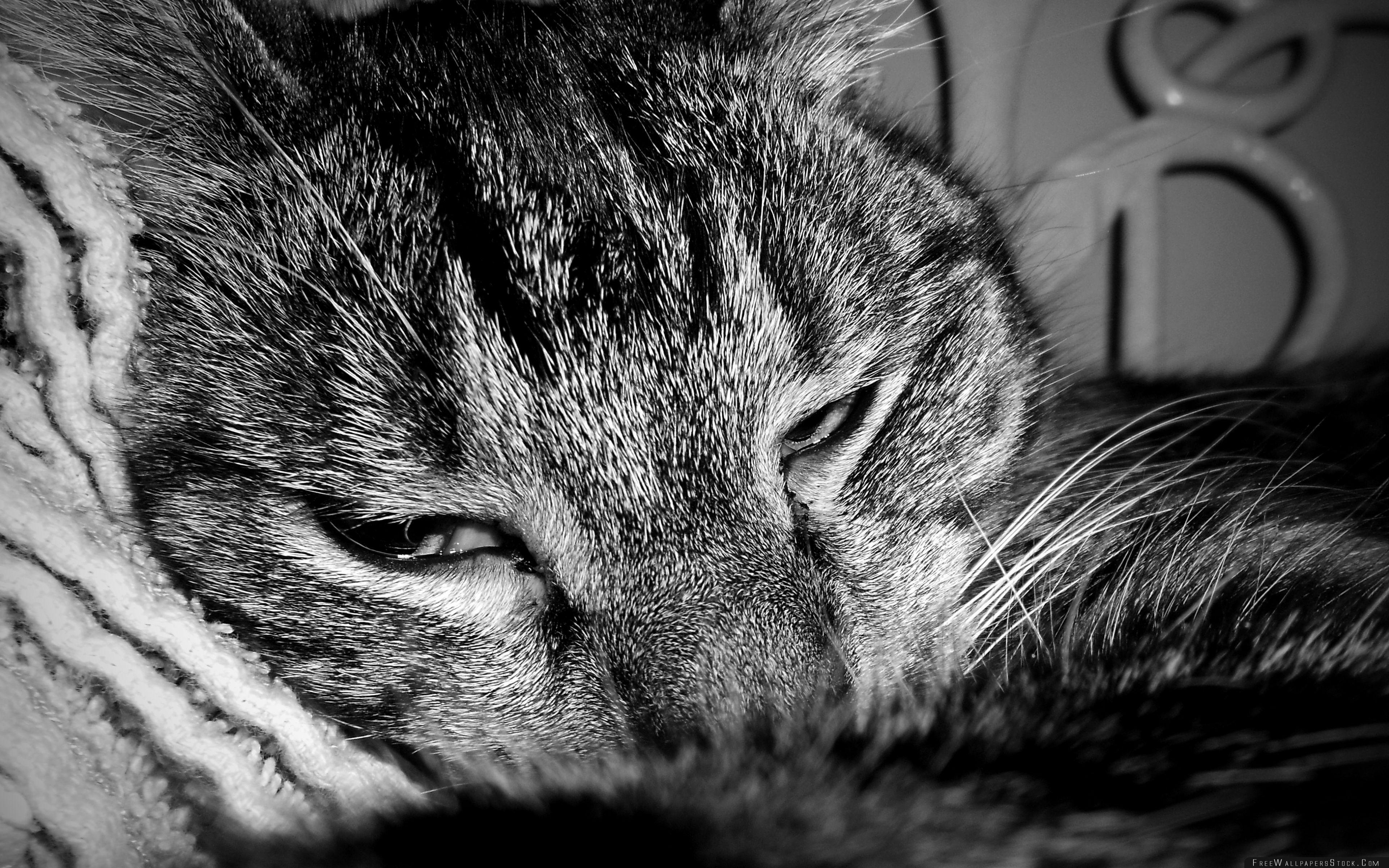 Download Free Wallpaper Sleepy Cat