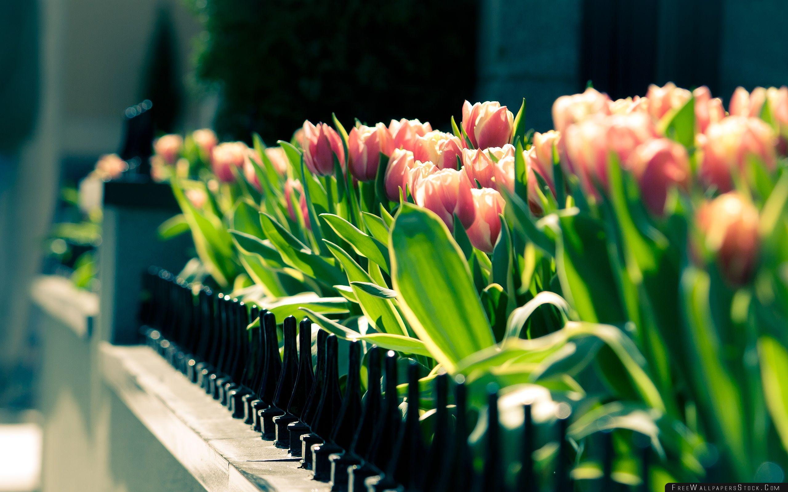 Download Free Wallpaper Spring Gathering