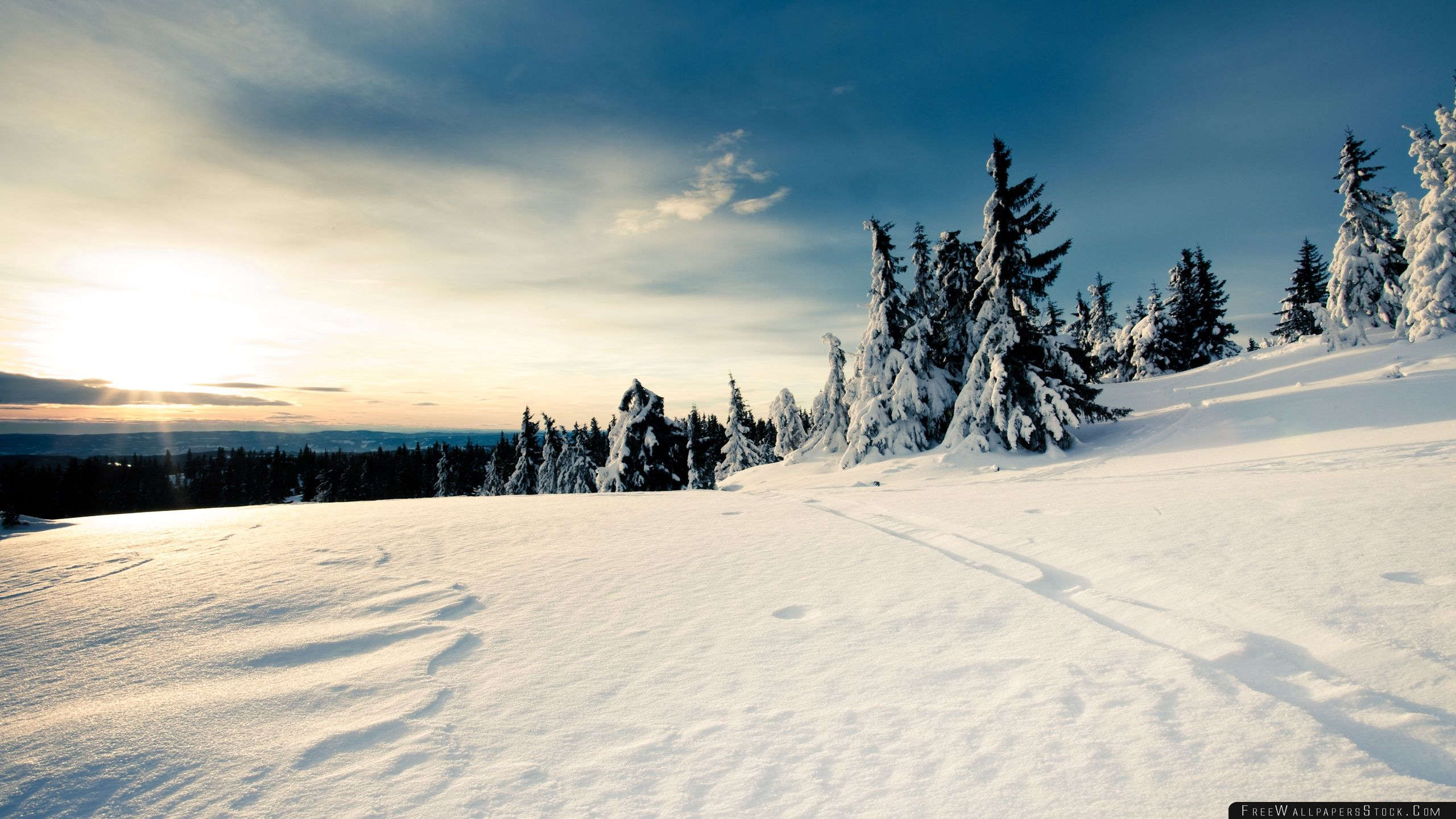 Download Free Wallpaper Sun Forests Nature Snow