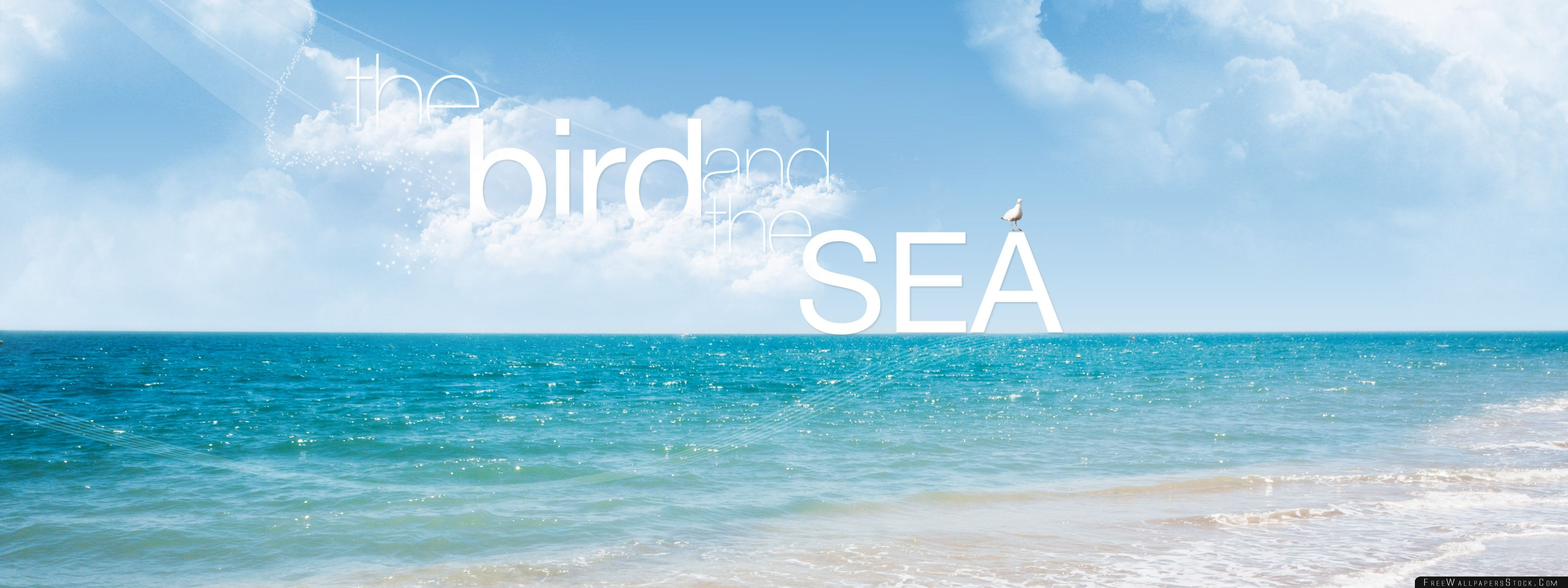 Download Free Wallpaper The Bird And Sea