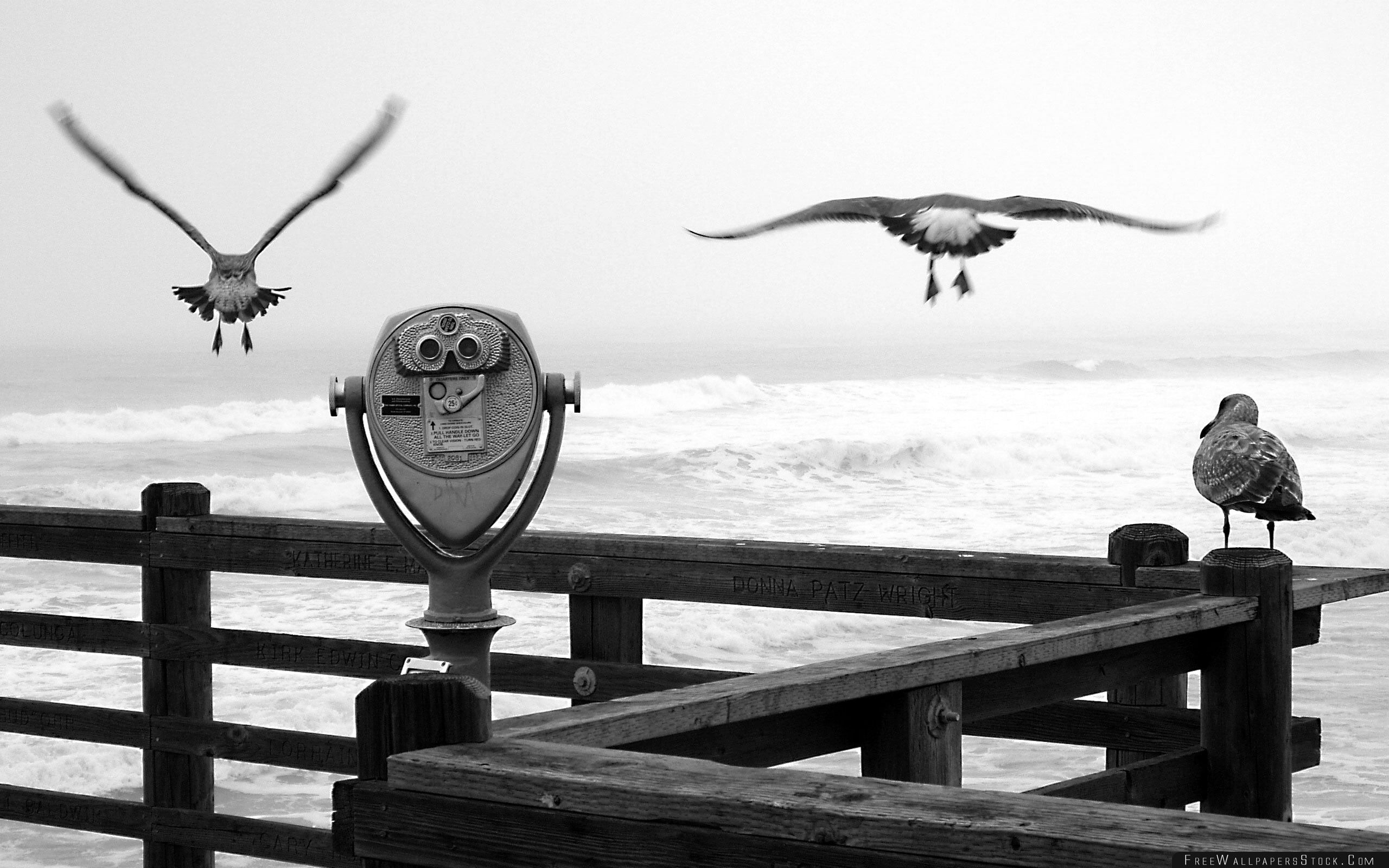 Download Free Wallpaper Three Birds   Pier