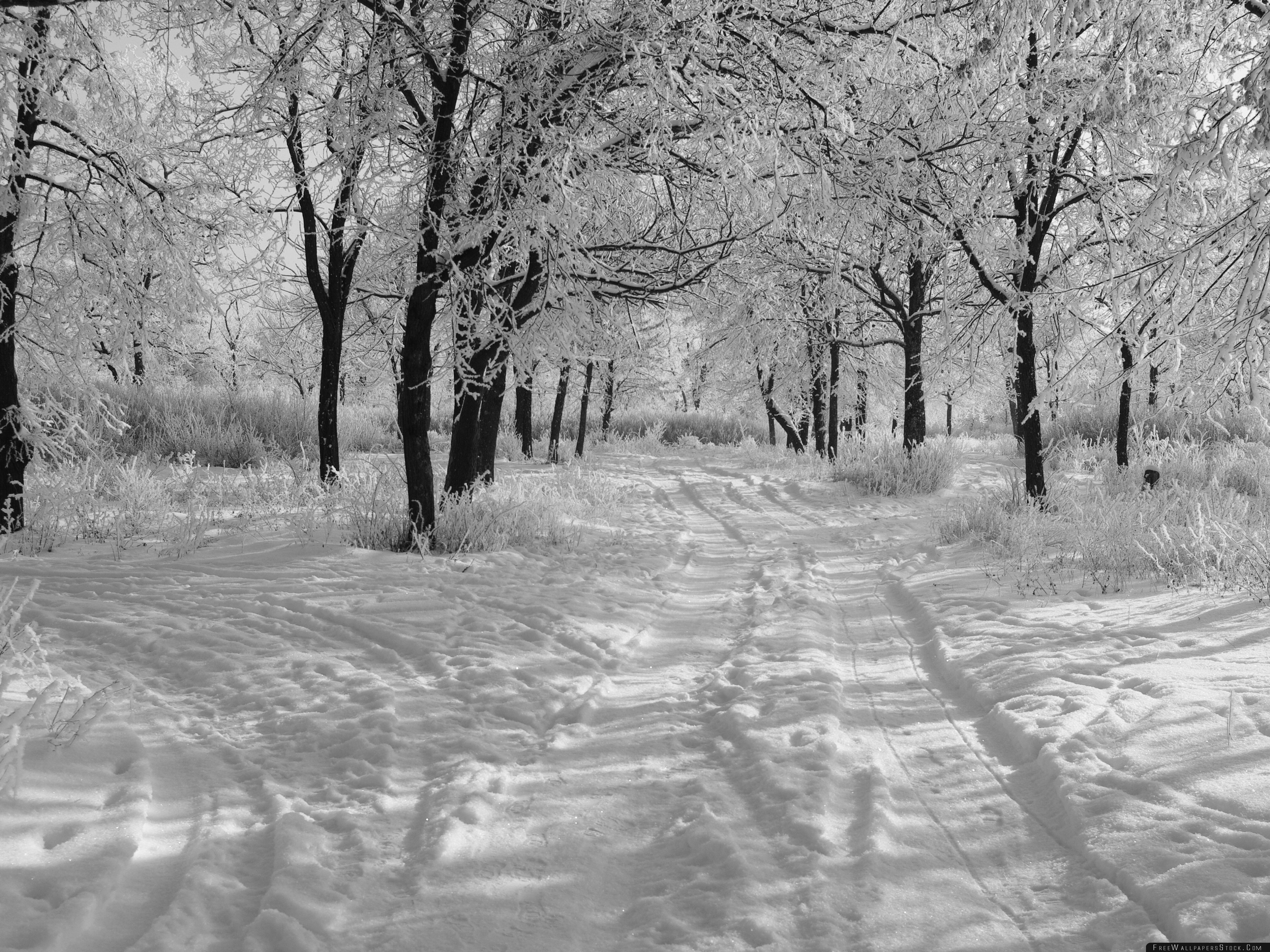 Download Free Wallpaper Trails   The Snow Winter