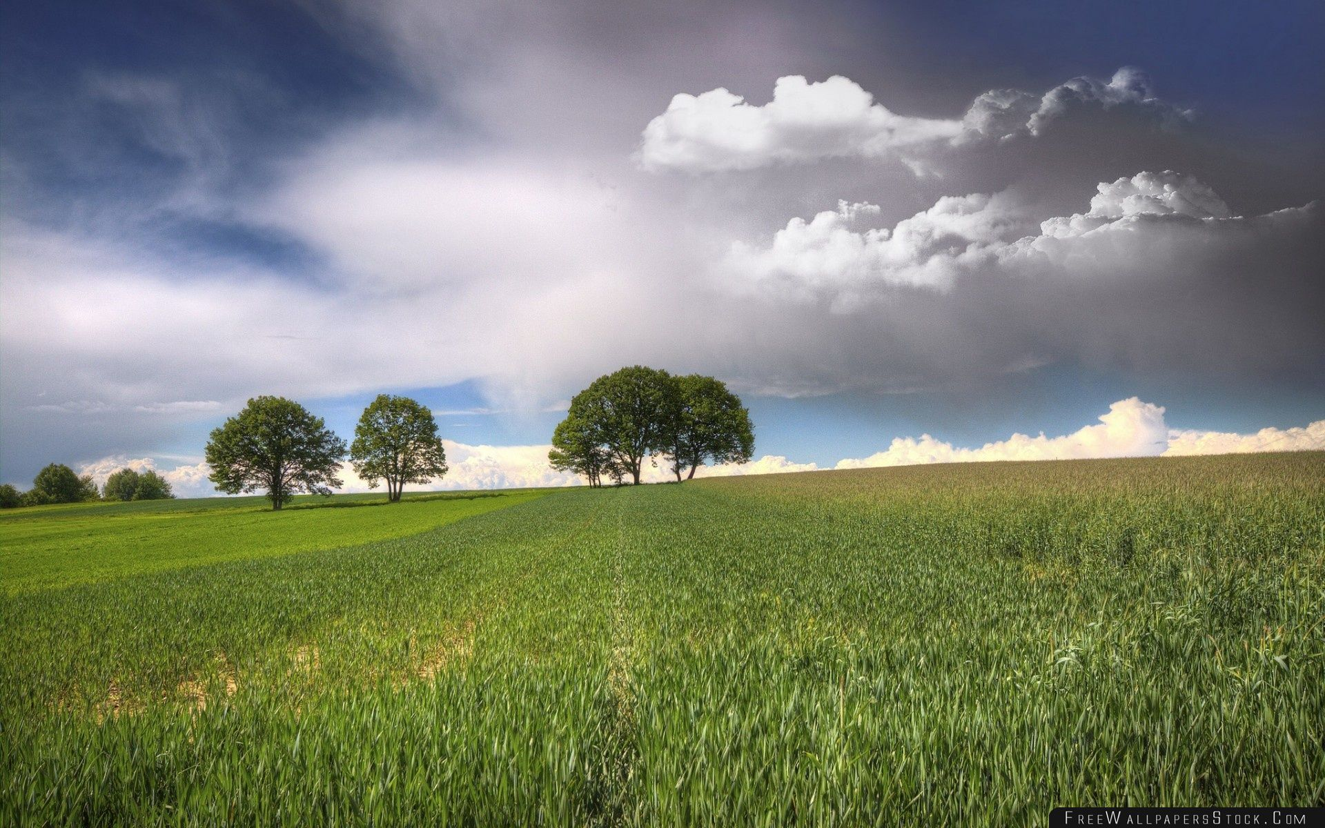 Download Free Wallpaper Trees   Fields Clouds