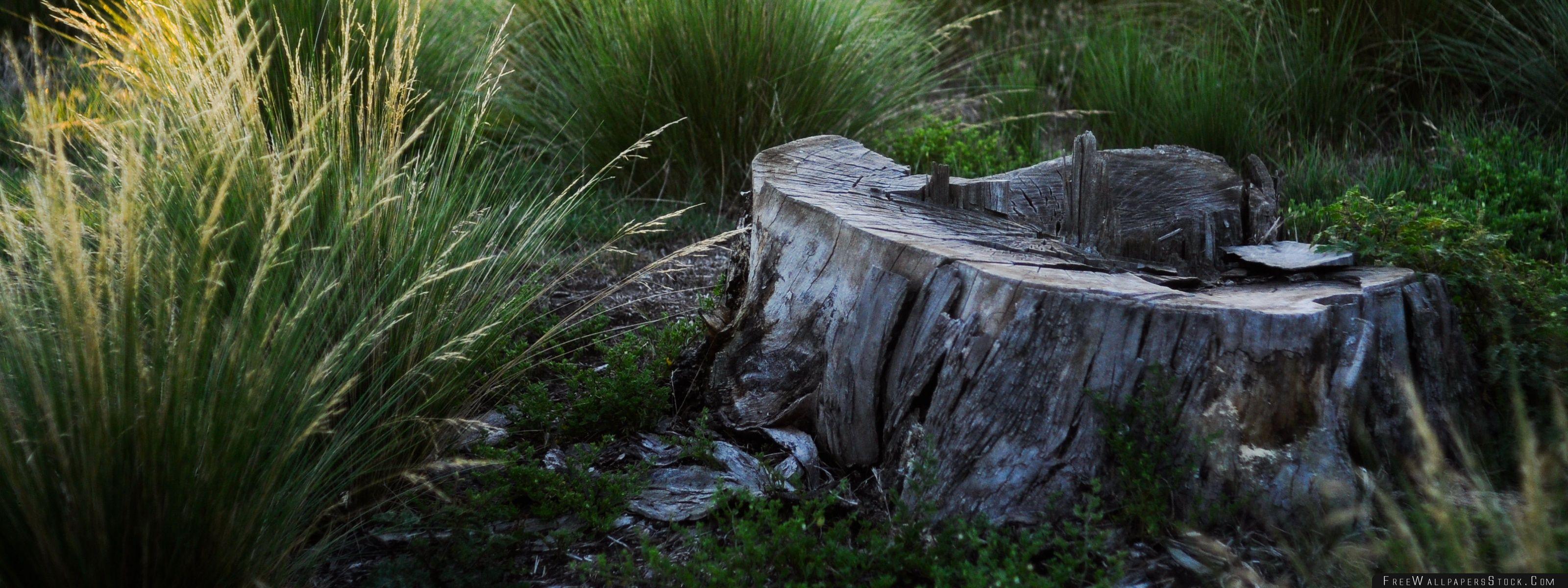 Download Free Wallpaper Tree Stump Summer