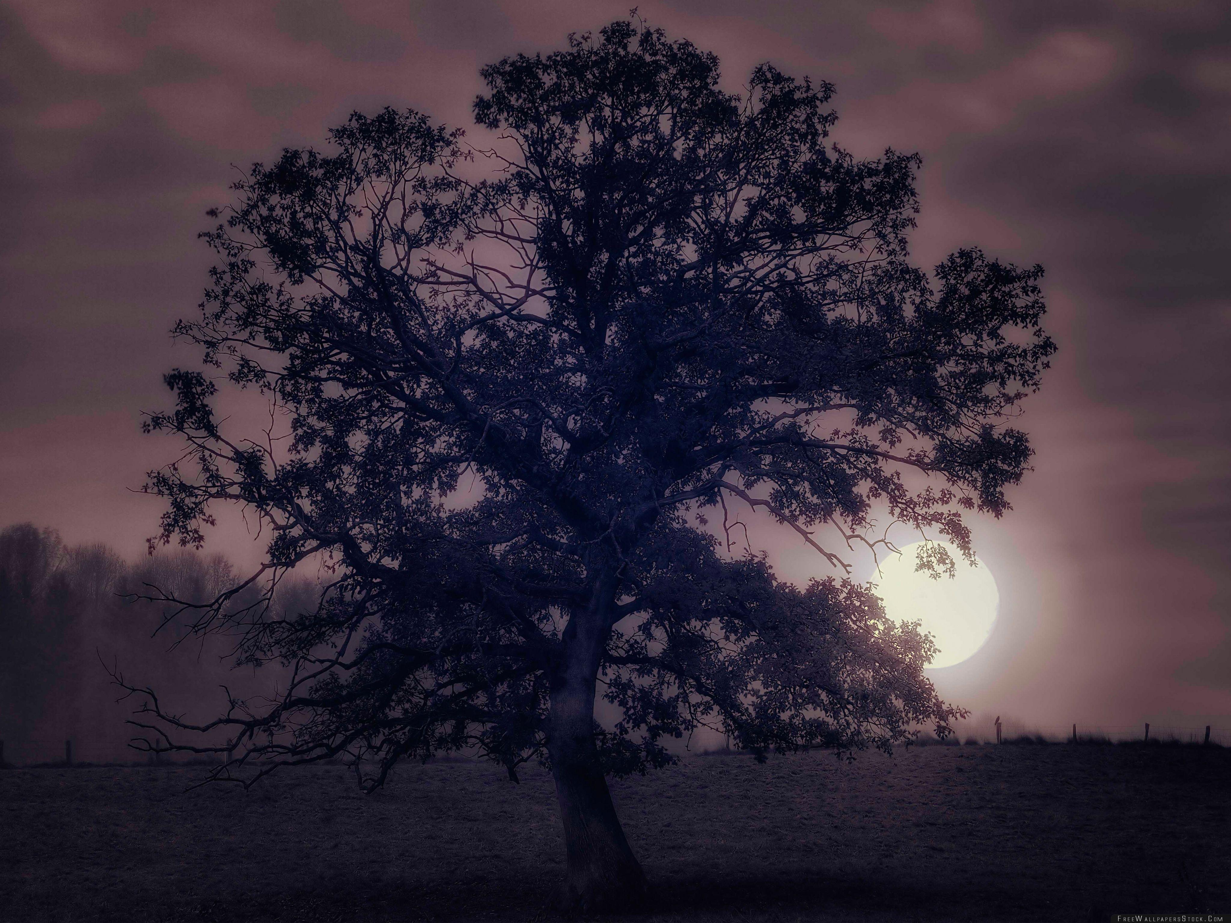 Download Free Wallpaper Tree Under Full Moon