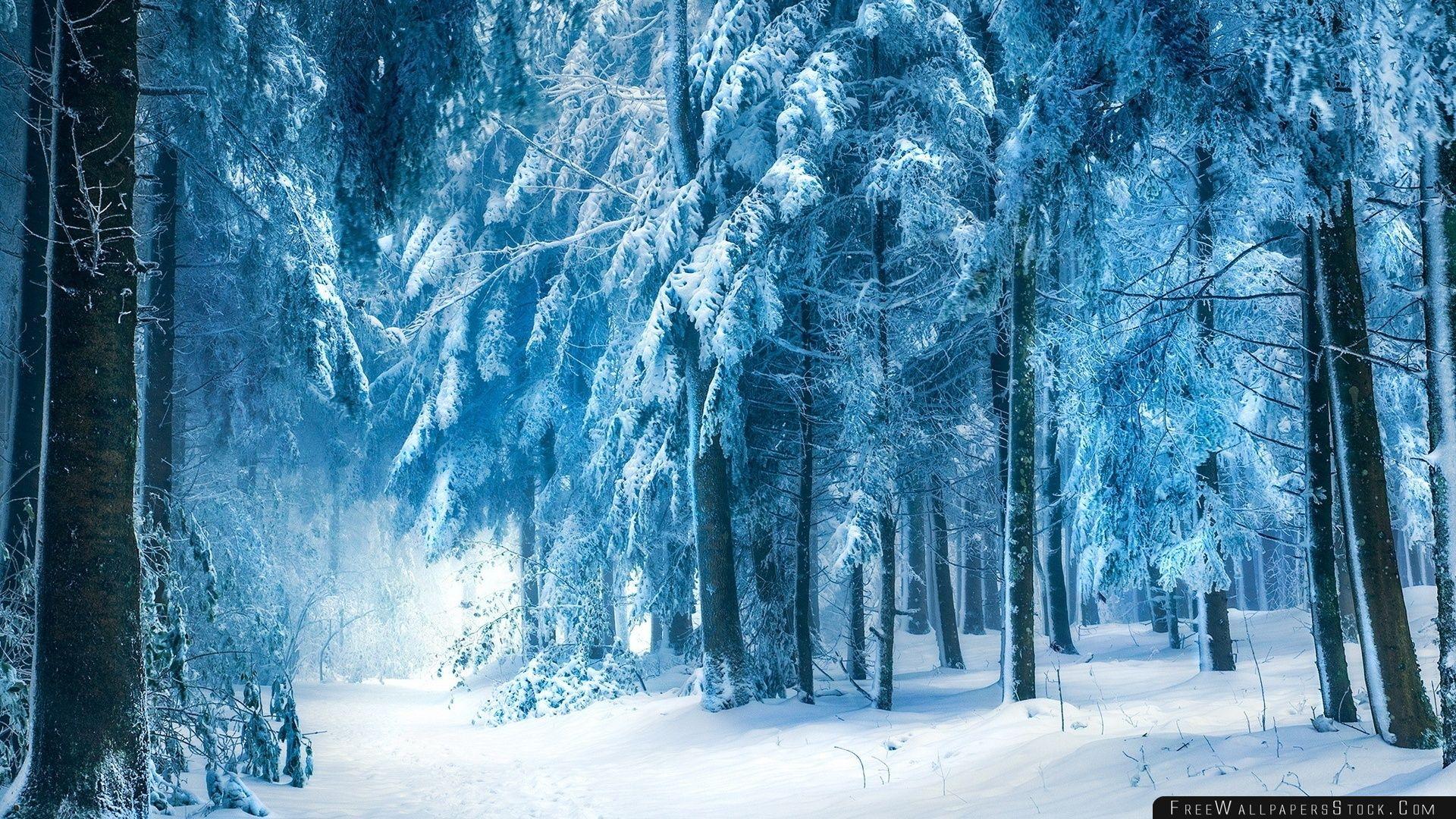 Download Free Wallpaper Under Heavy Snow