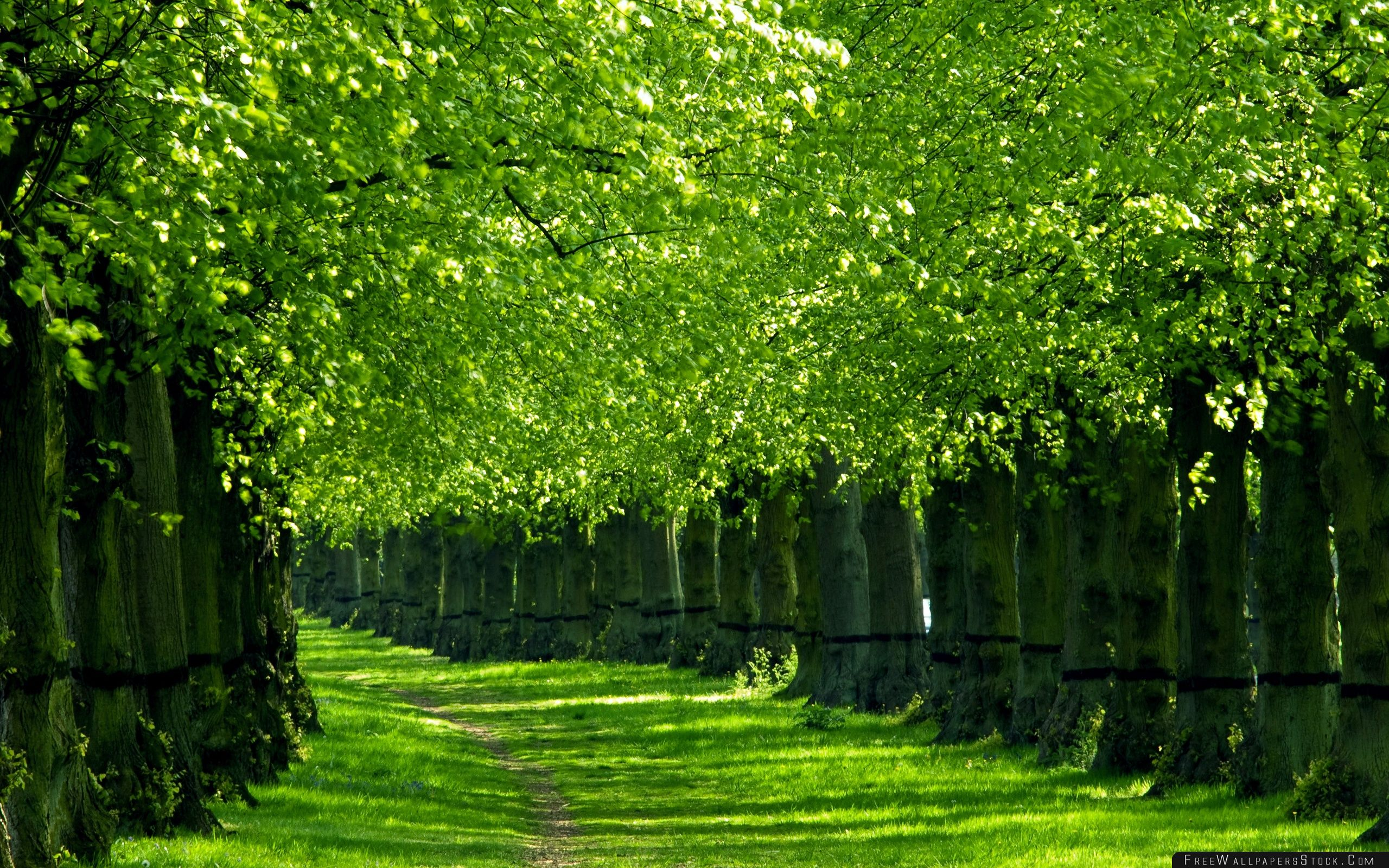 Download Free Wallpaper Under The Trees