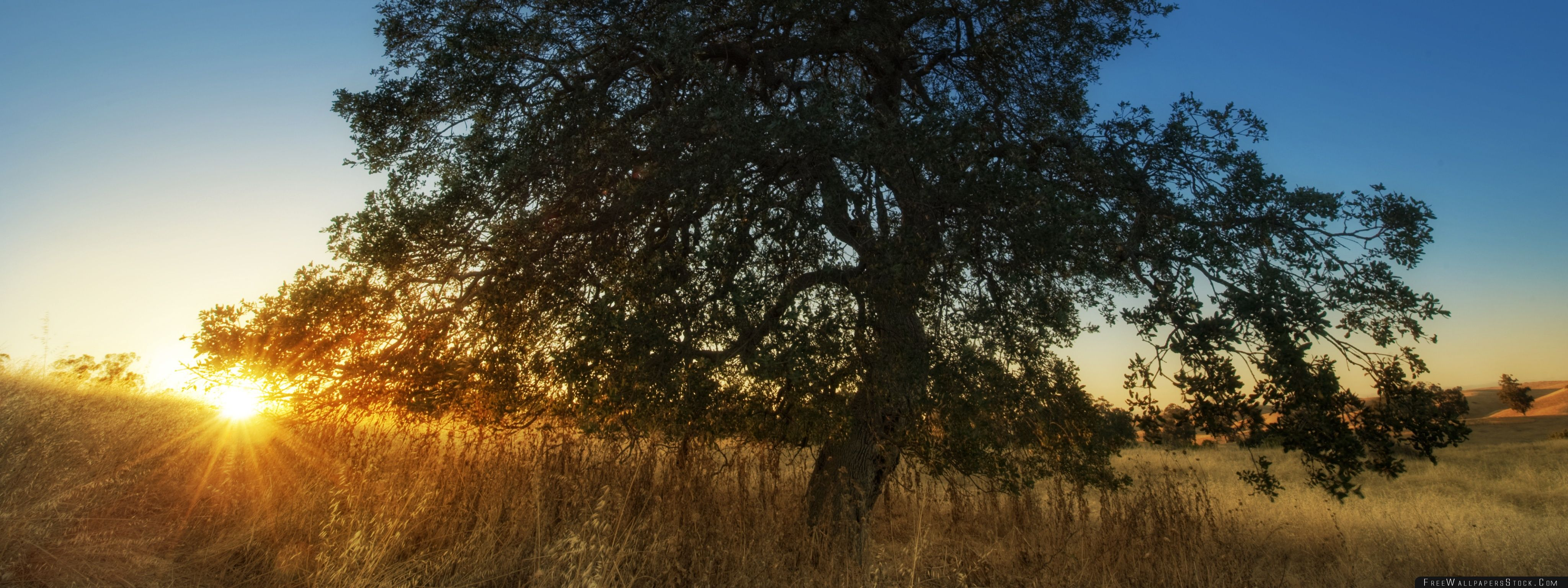 Download Free Wallpaper View From Arastradero Preserve