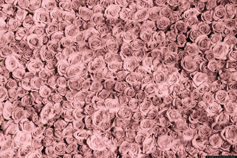 Download Free Wallpaper Vintage Pink Roses Tumblr