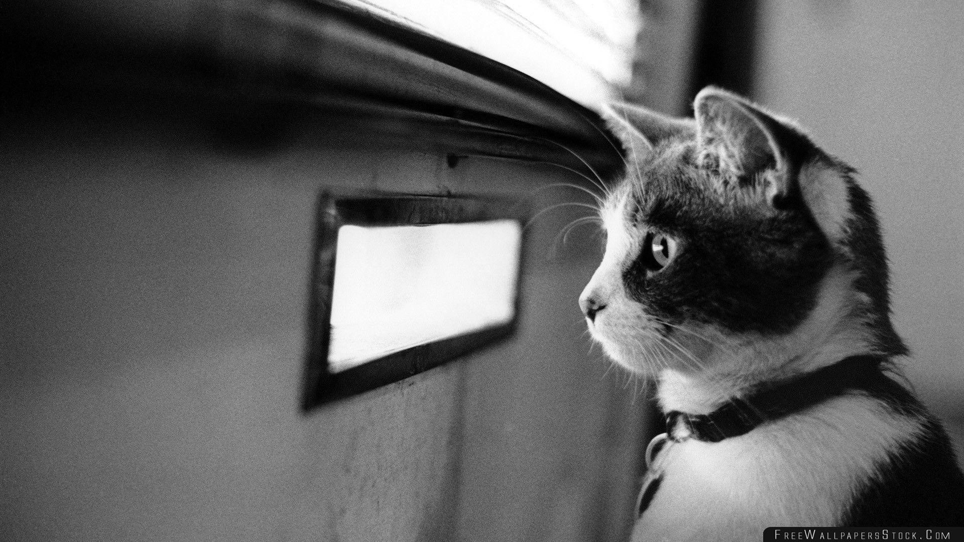 Download Free Wallpaper Waiting Cat