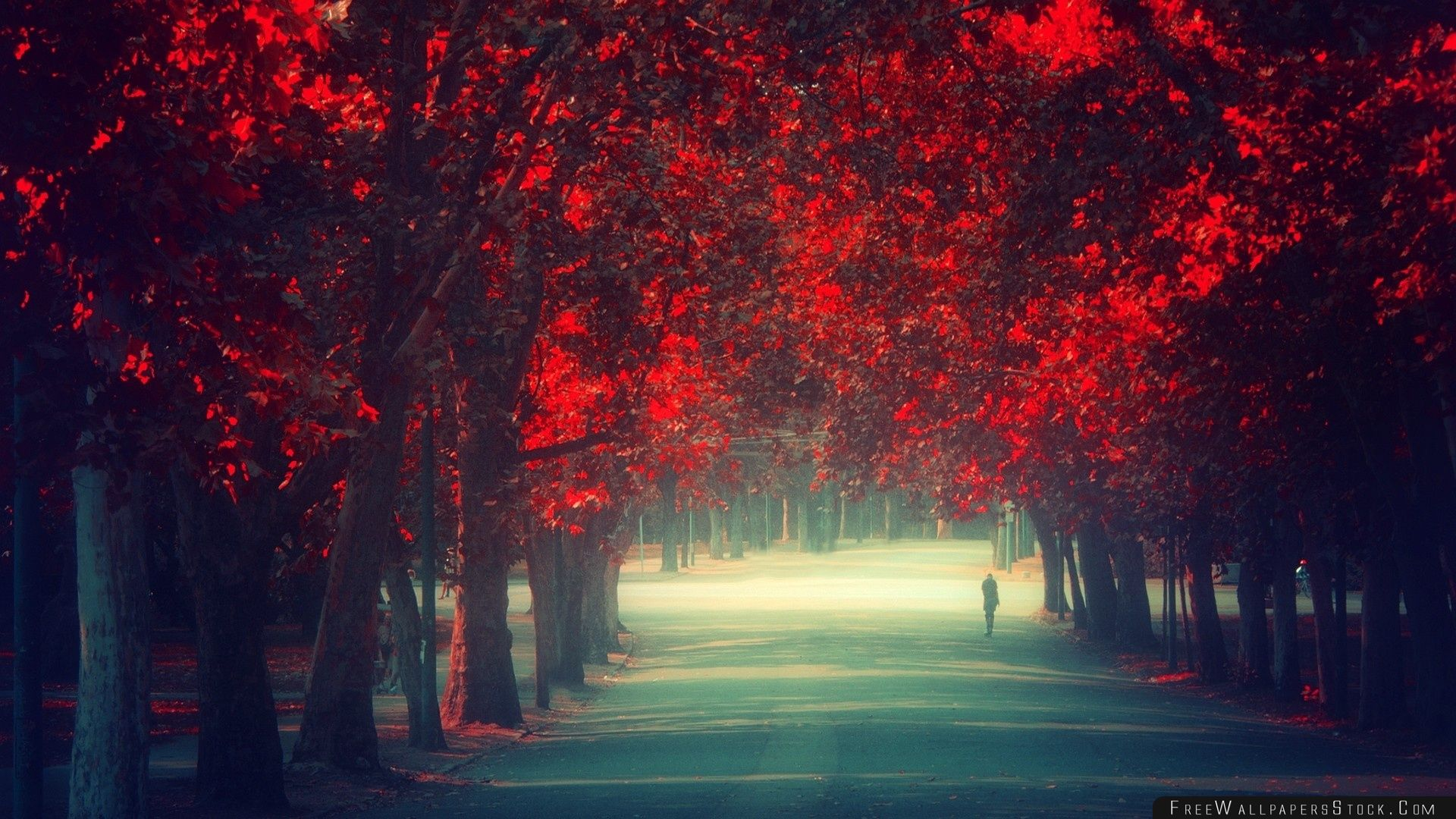 Download Free Wallpaper Walking Alone