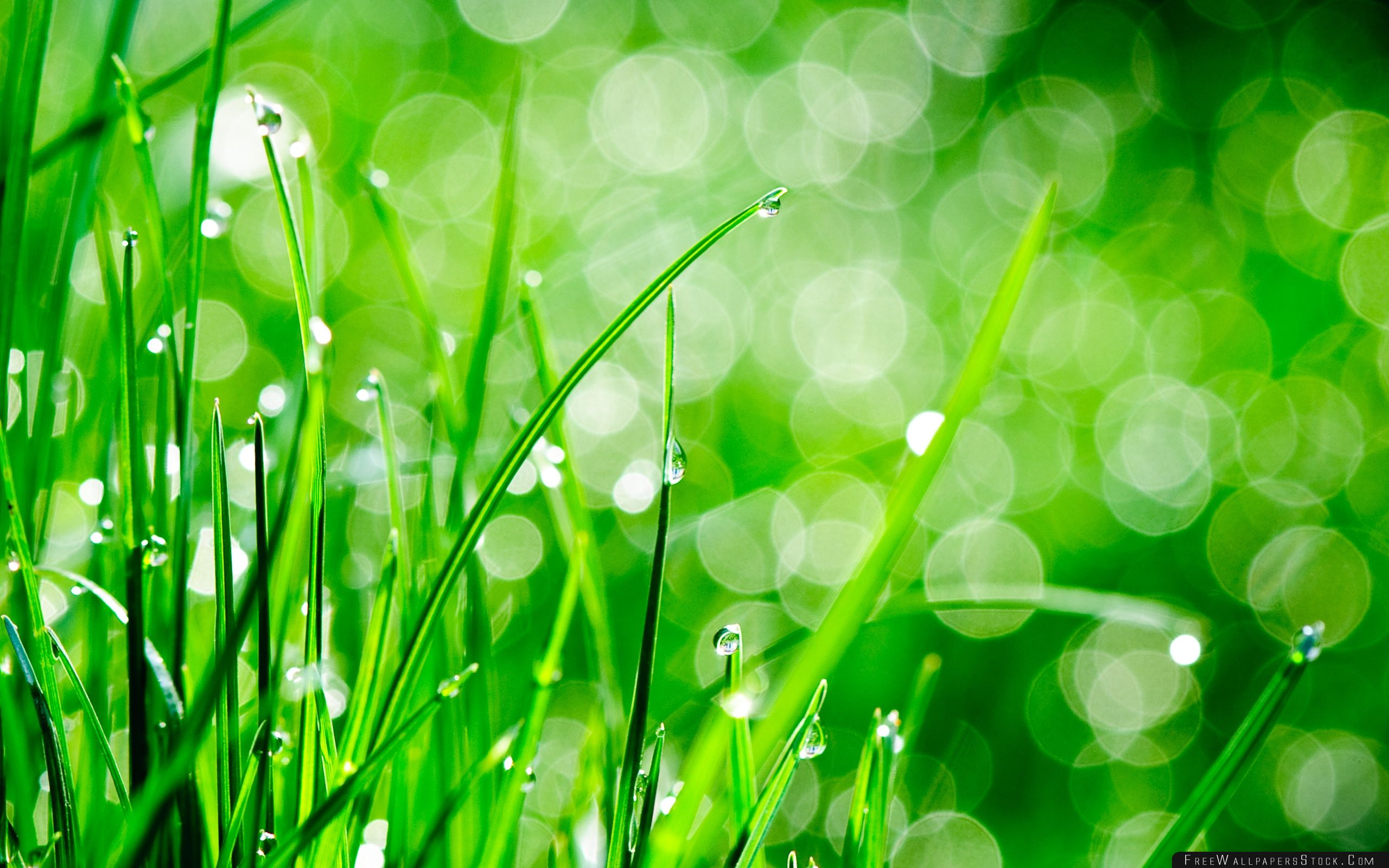 Download Free Wallpaper Water Drops   Grass