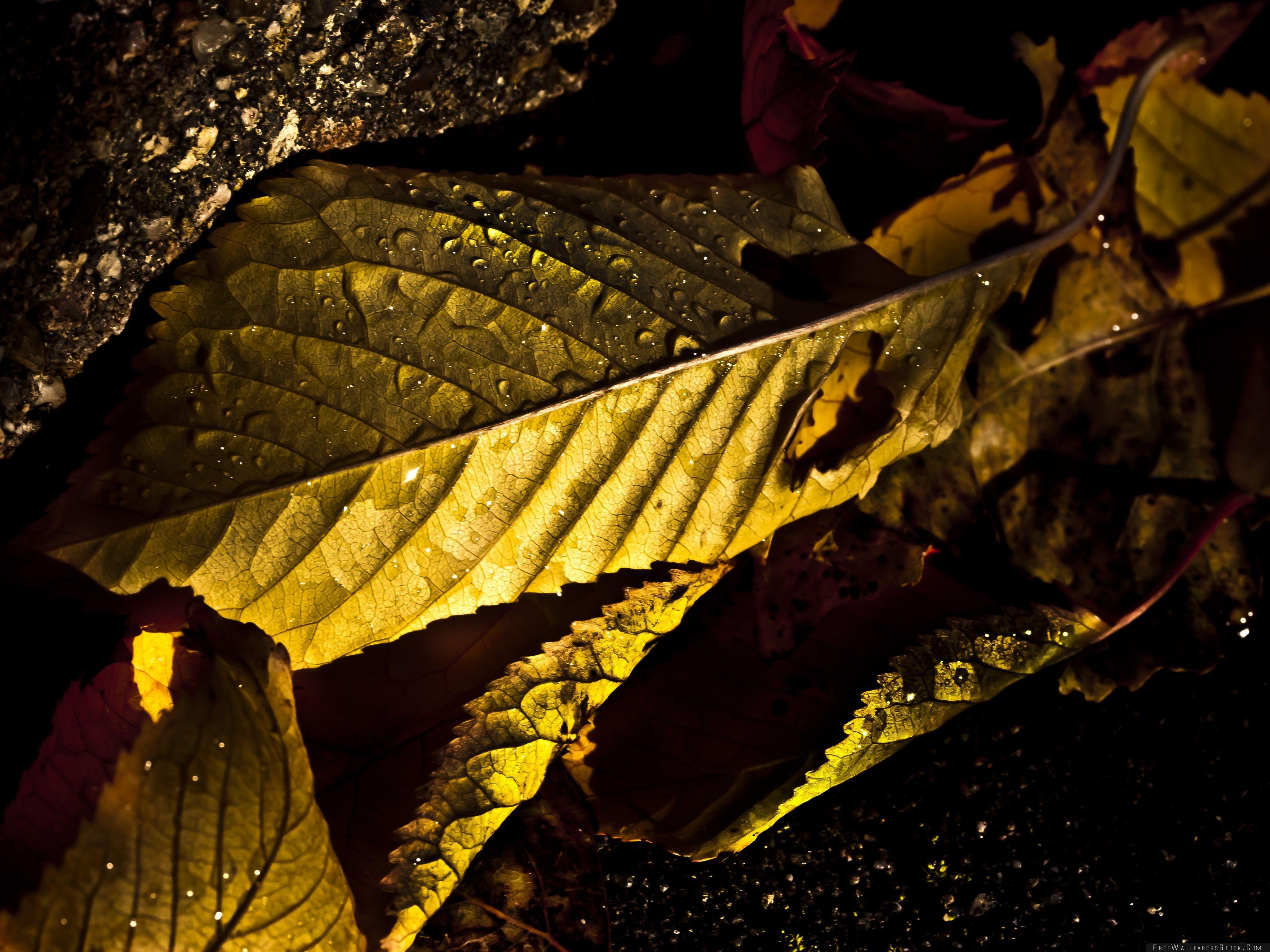 Download Free Wallpaper Wet Leaves Macro Autumn