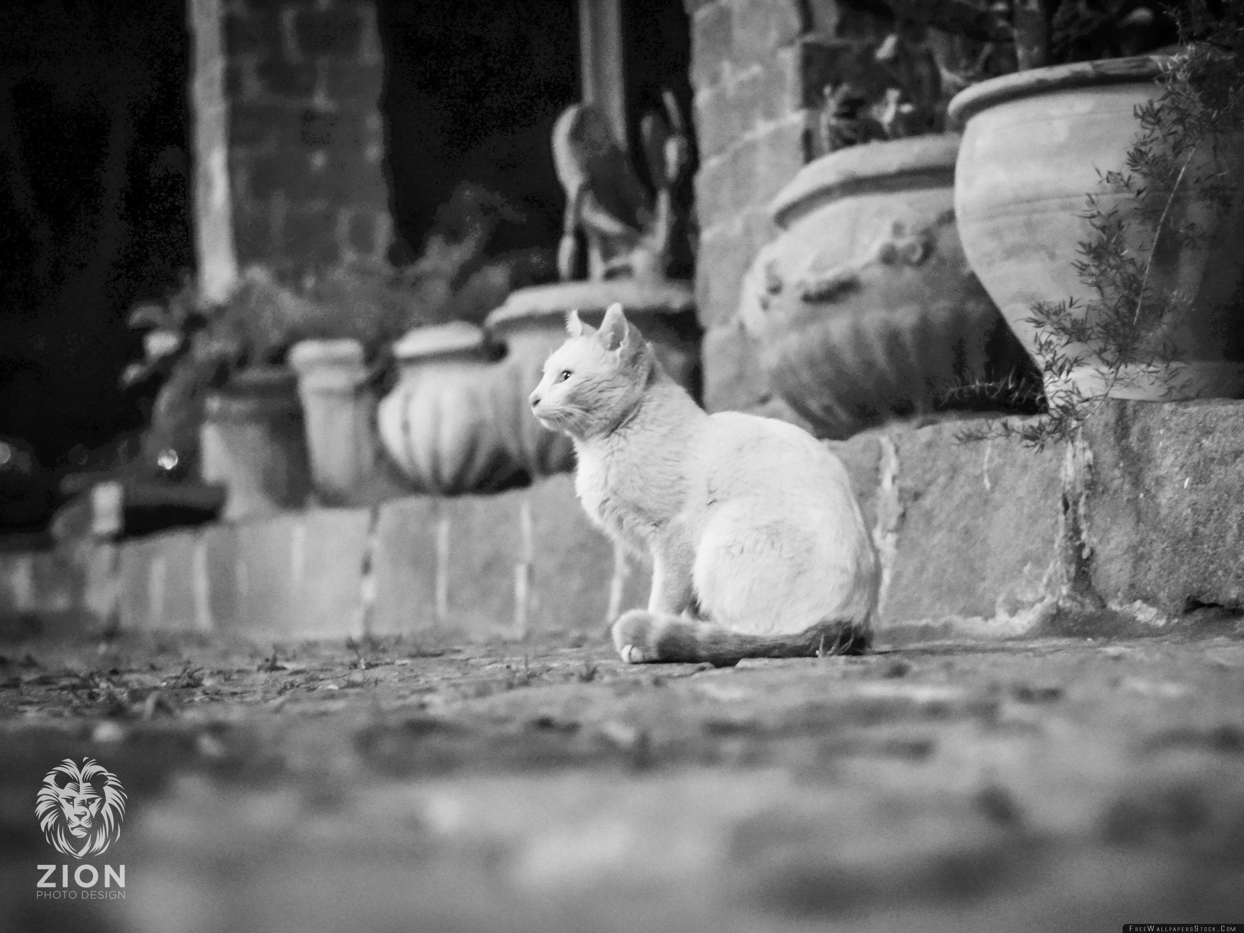 Download Free Wallpaper White Cat