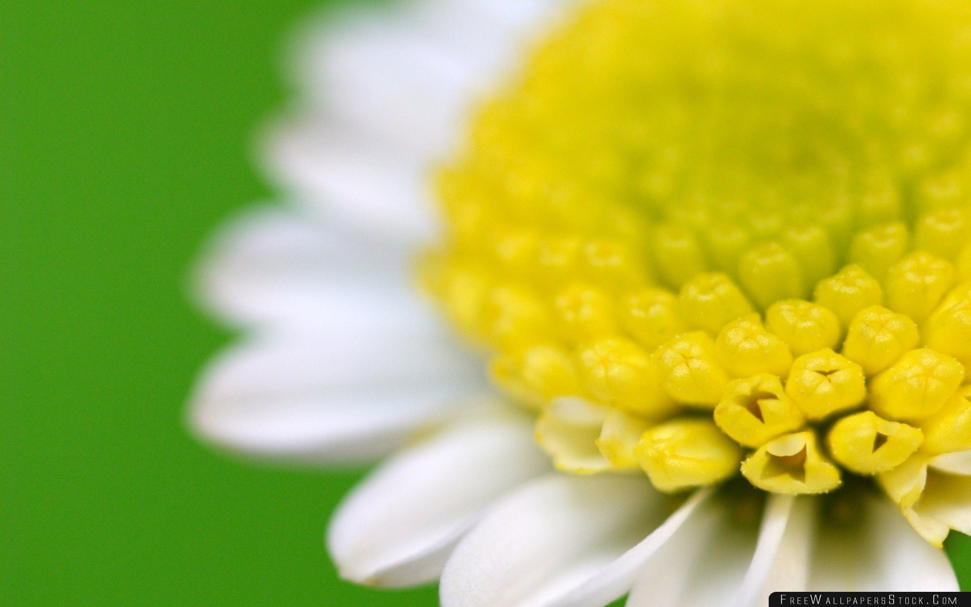 Download Free Wallpaper White Flower Macro Green Background