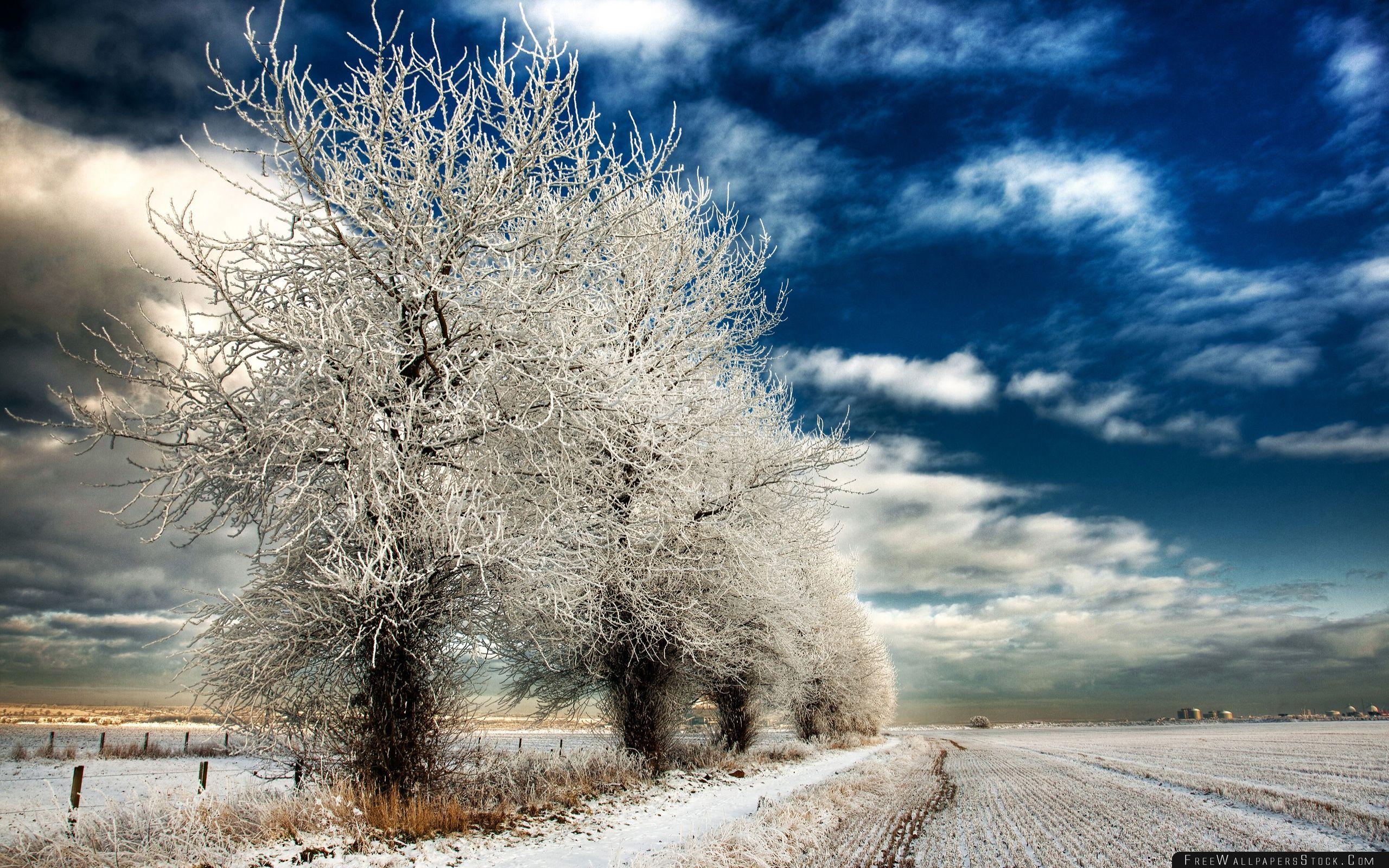 Download Free Wallpaper White Frozen Trees