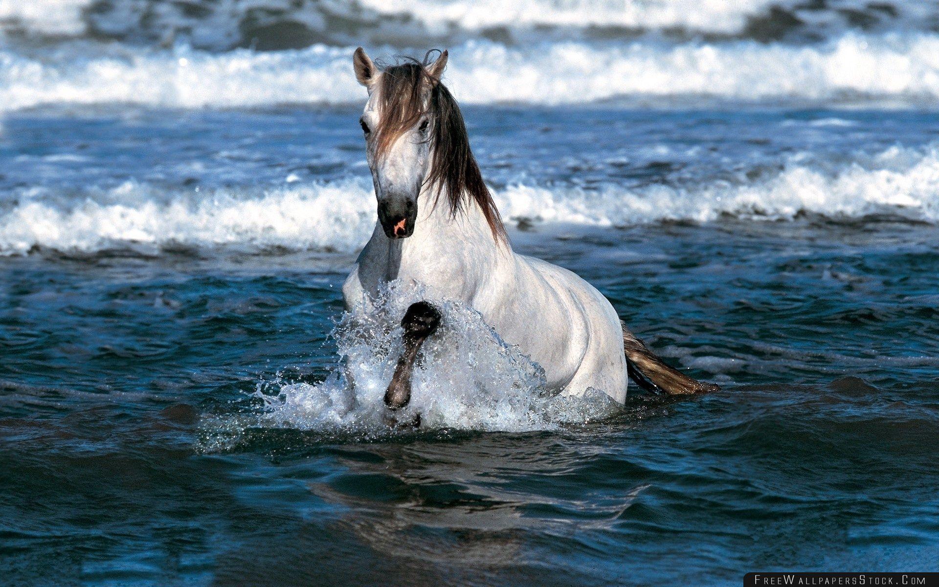 Download Free Wallpaper White Horse Running   Water