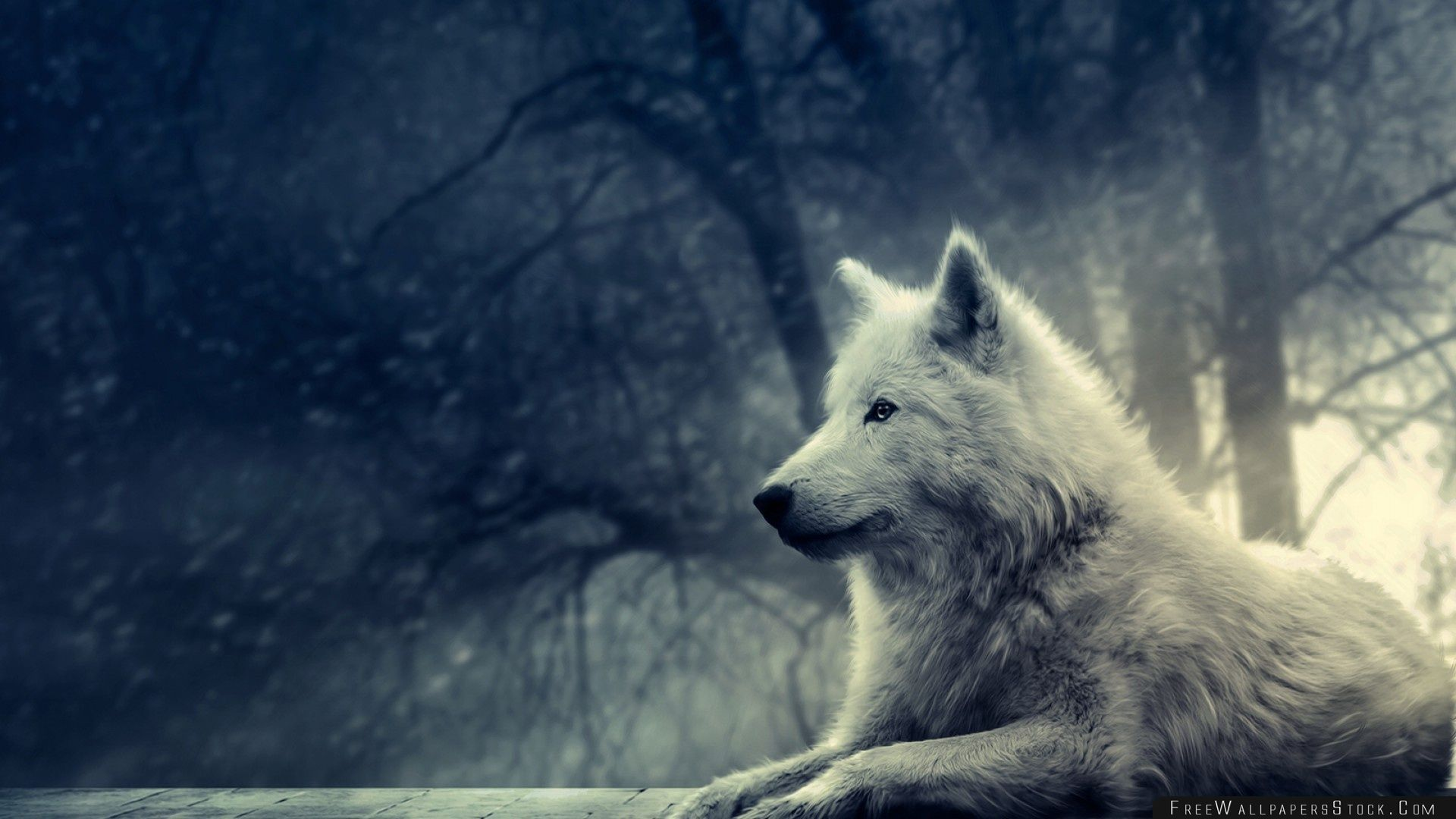 Download Free Wallpaper White Wolf Painting