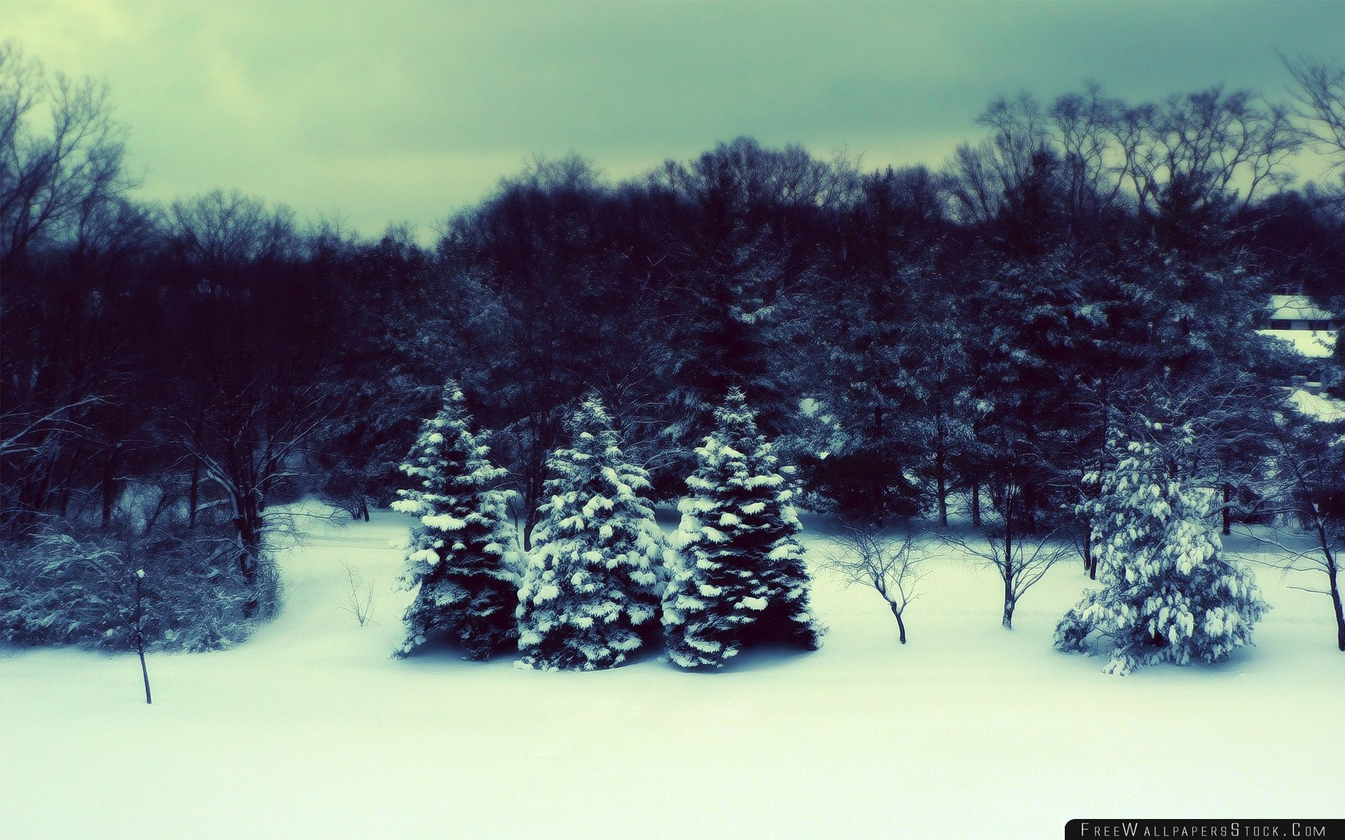 Download Free Wallpaper Winter Landscape Three Fir Trees
