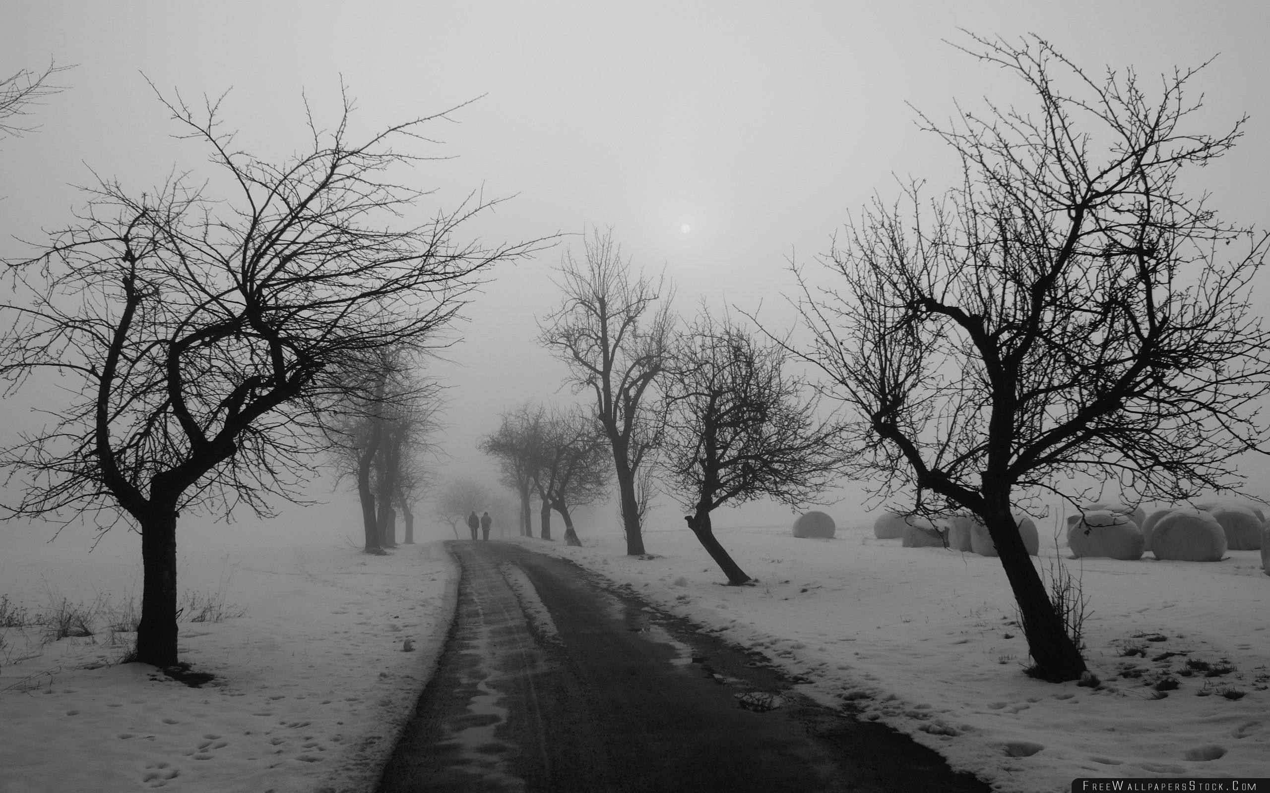 Download Free Wallpaper Winter Road Black And White
