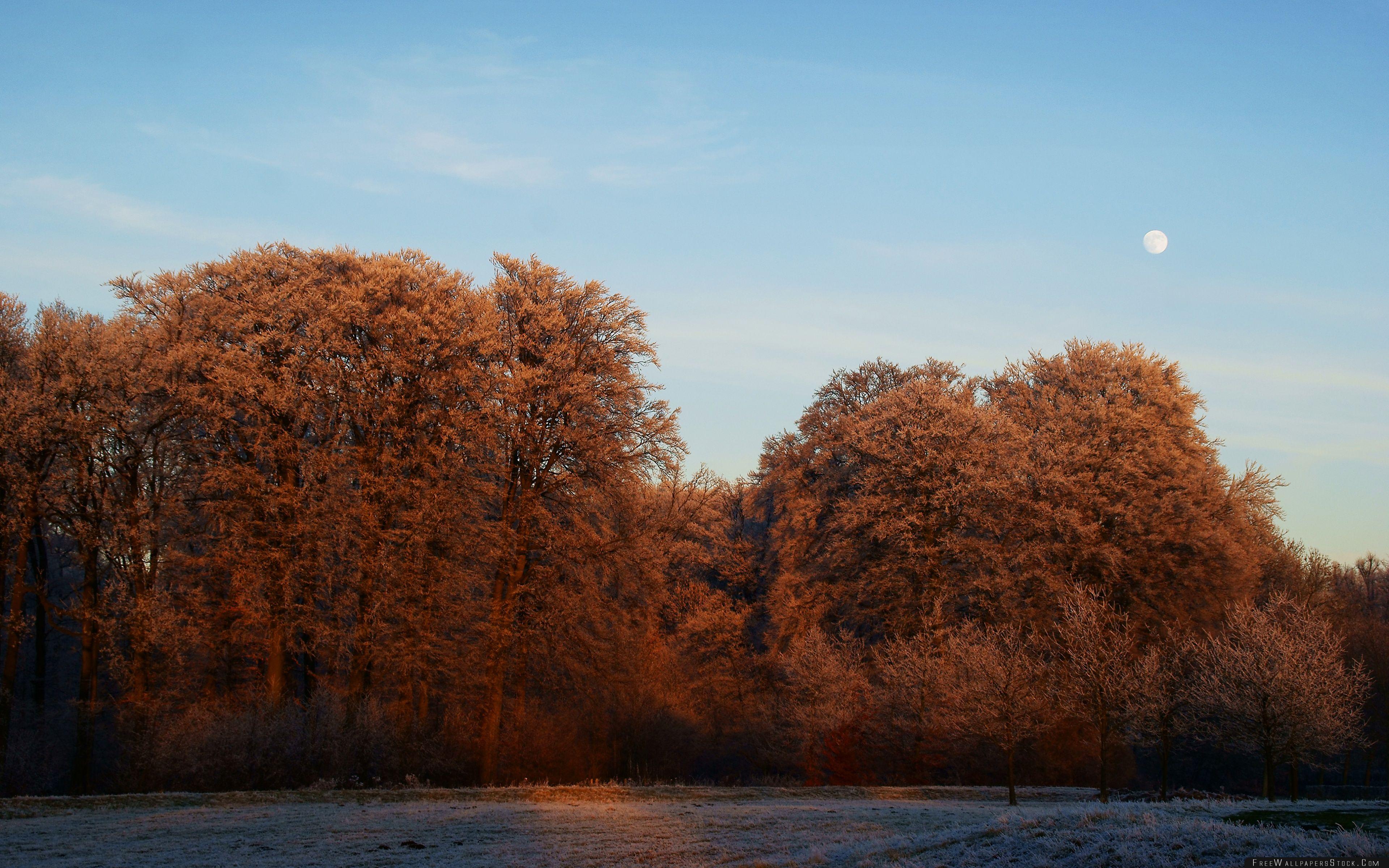 Download Free Wallpaper Winter Sunset Utrecht