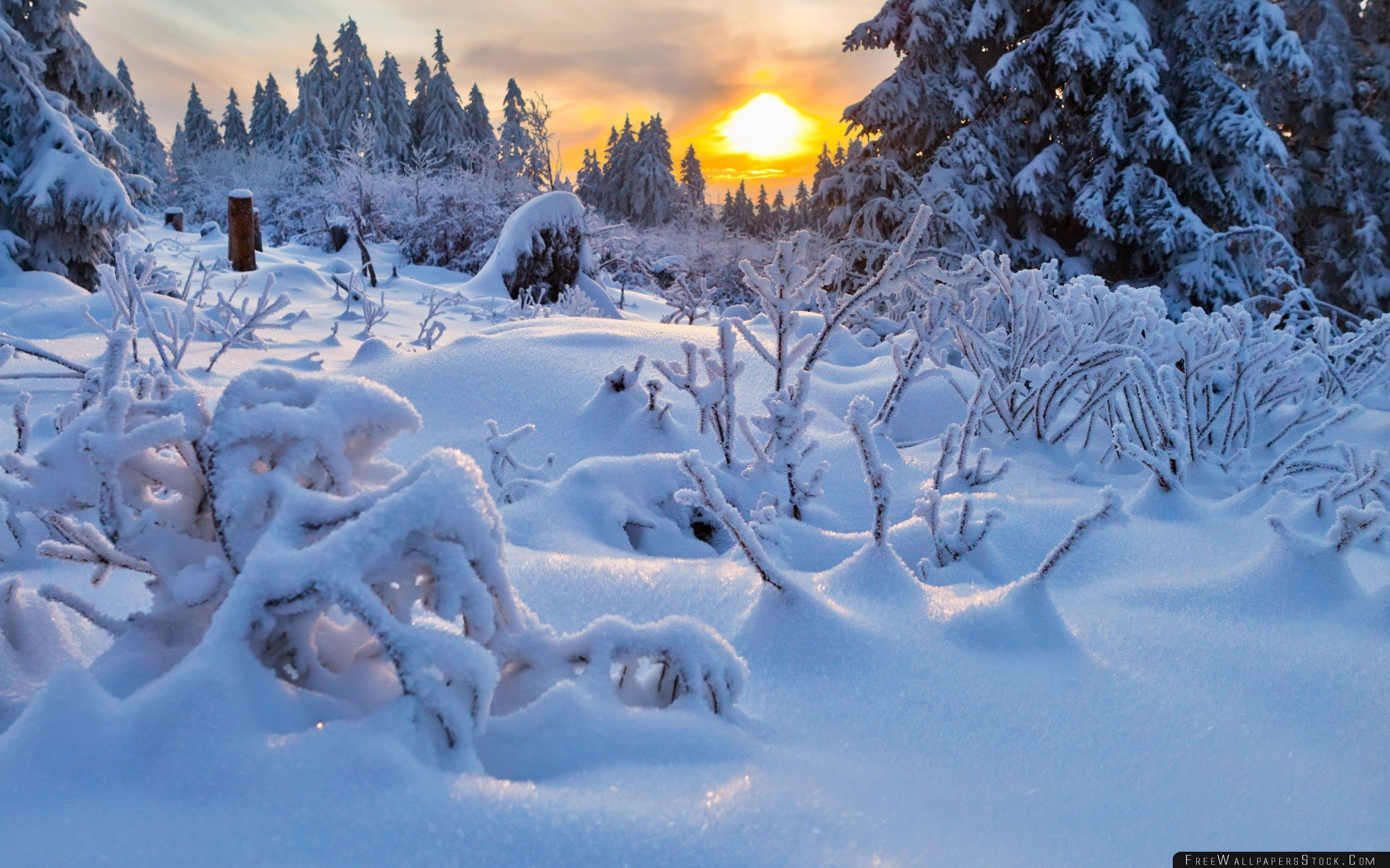 Download Free Wallpaper Winter Sun