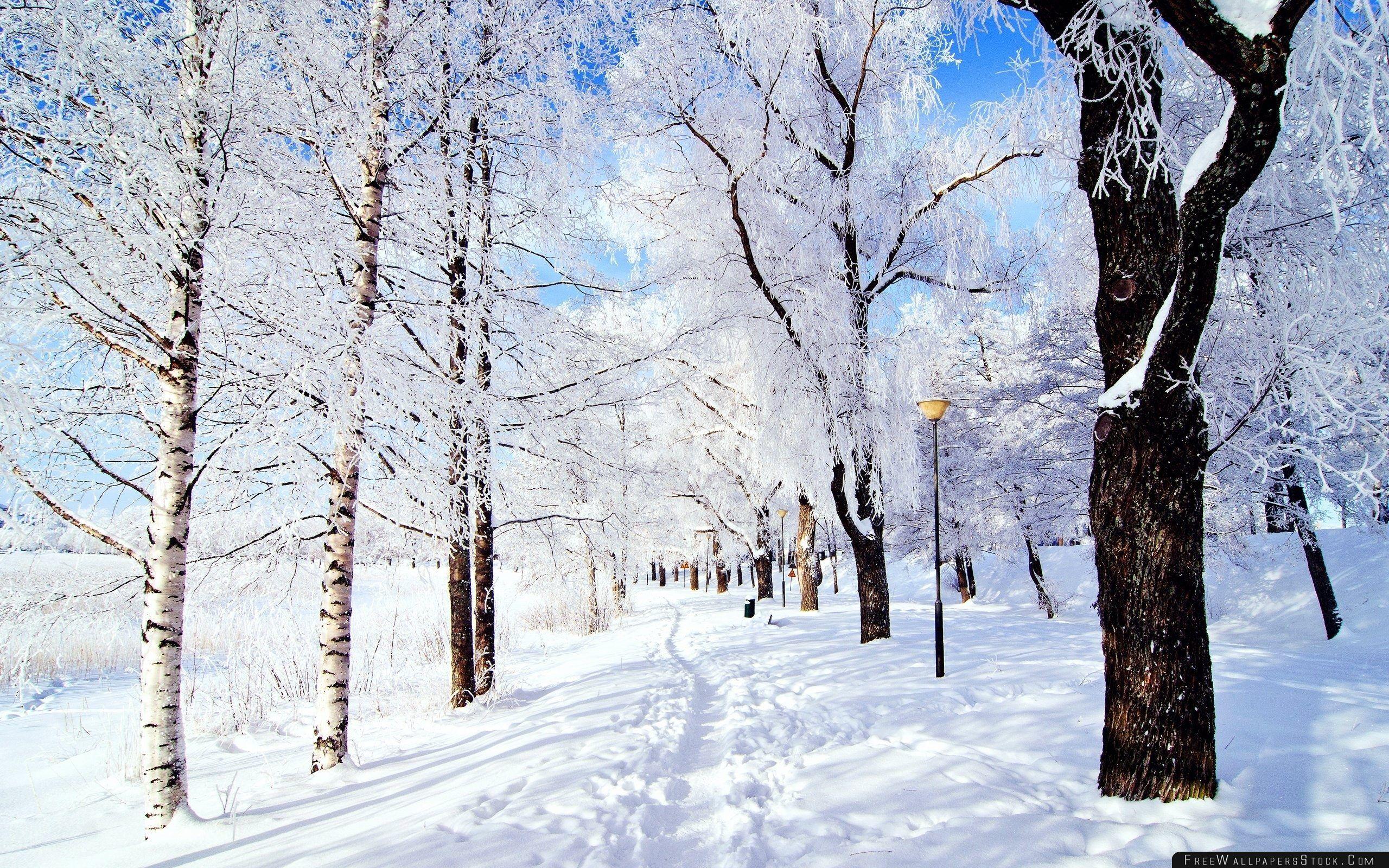 Download Free Wallpaper Winter Wonderland