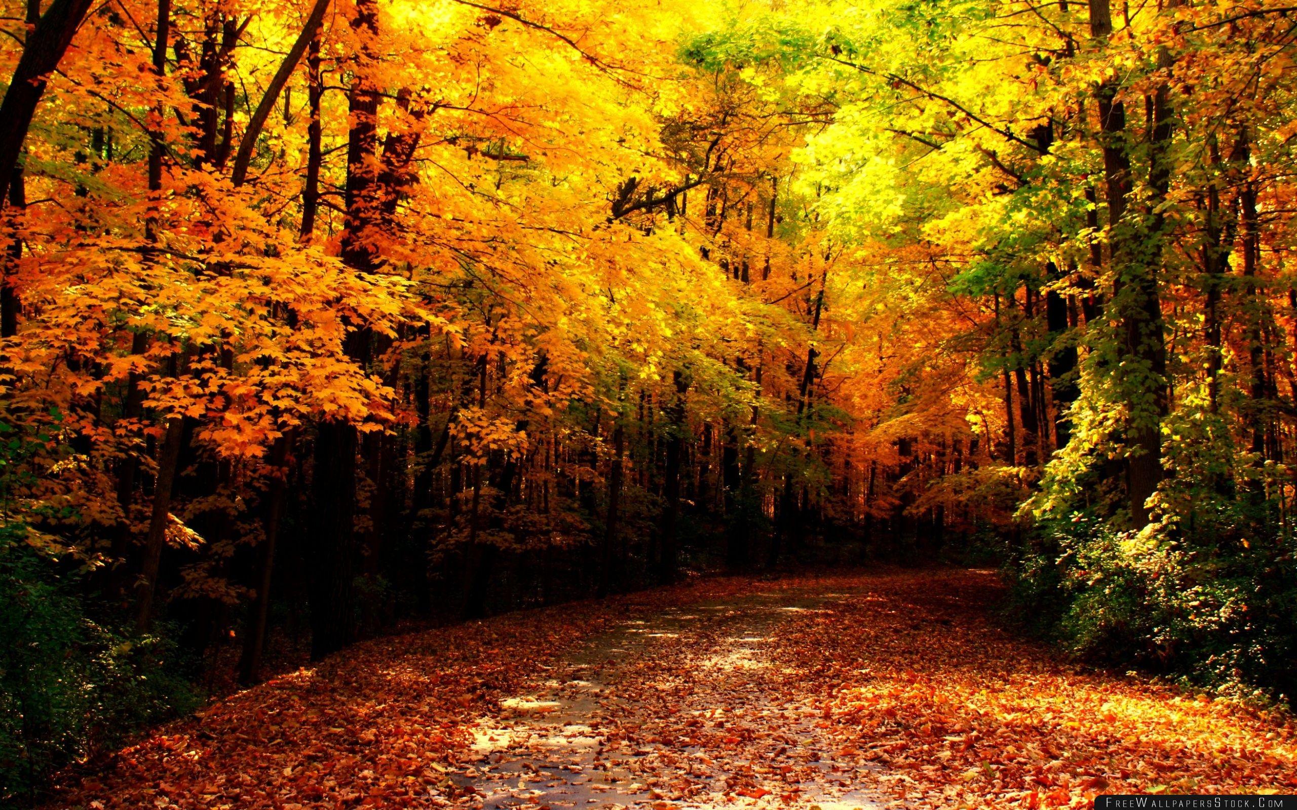 Download Free Wallpaper Wisconsin Autumn