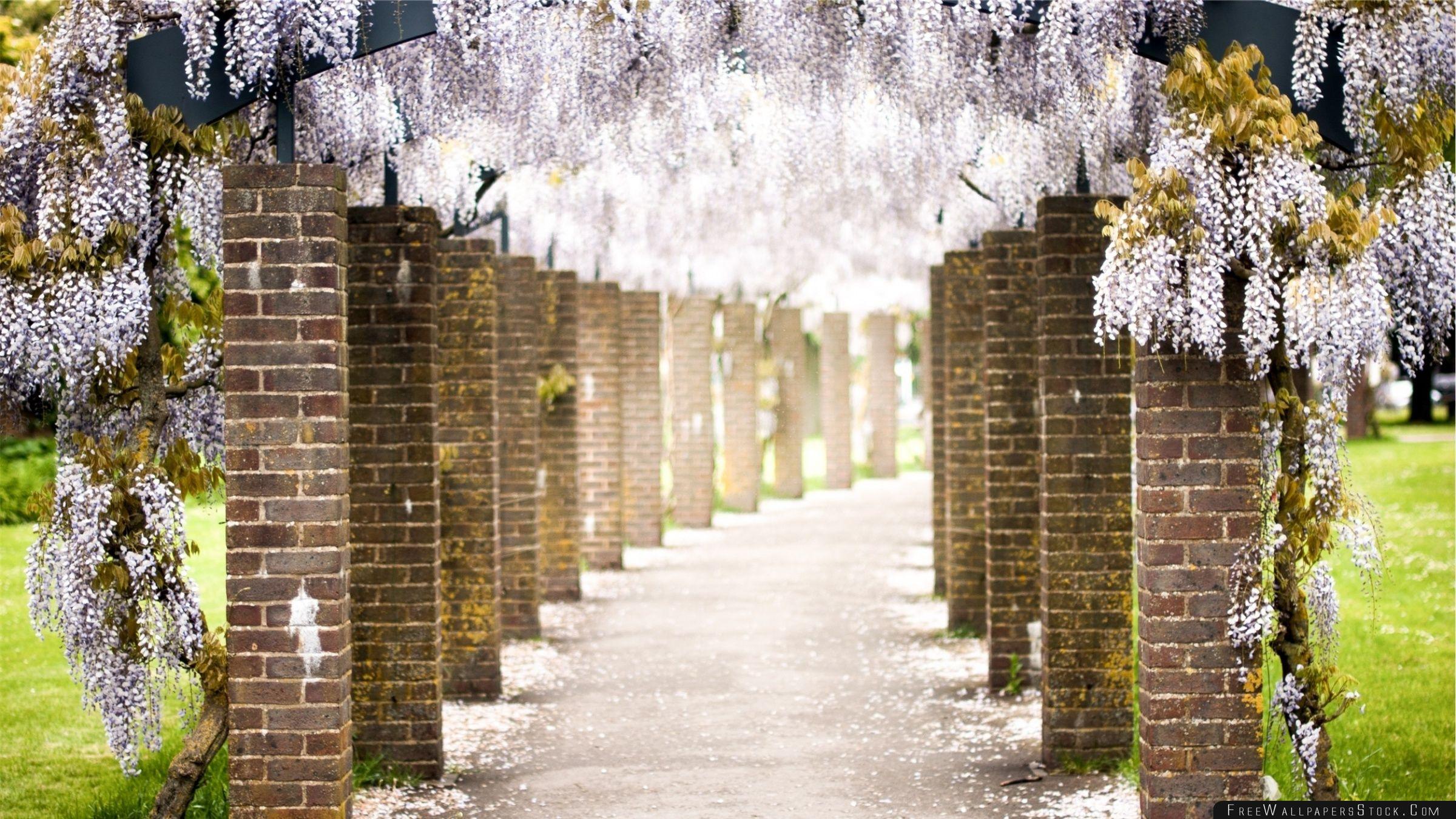 Download Free Wallpaper Wisteria Tree Tunnel