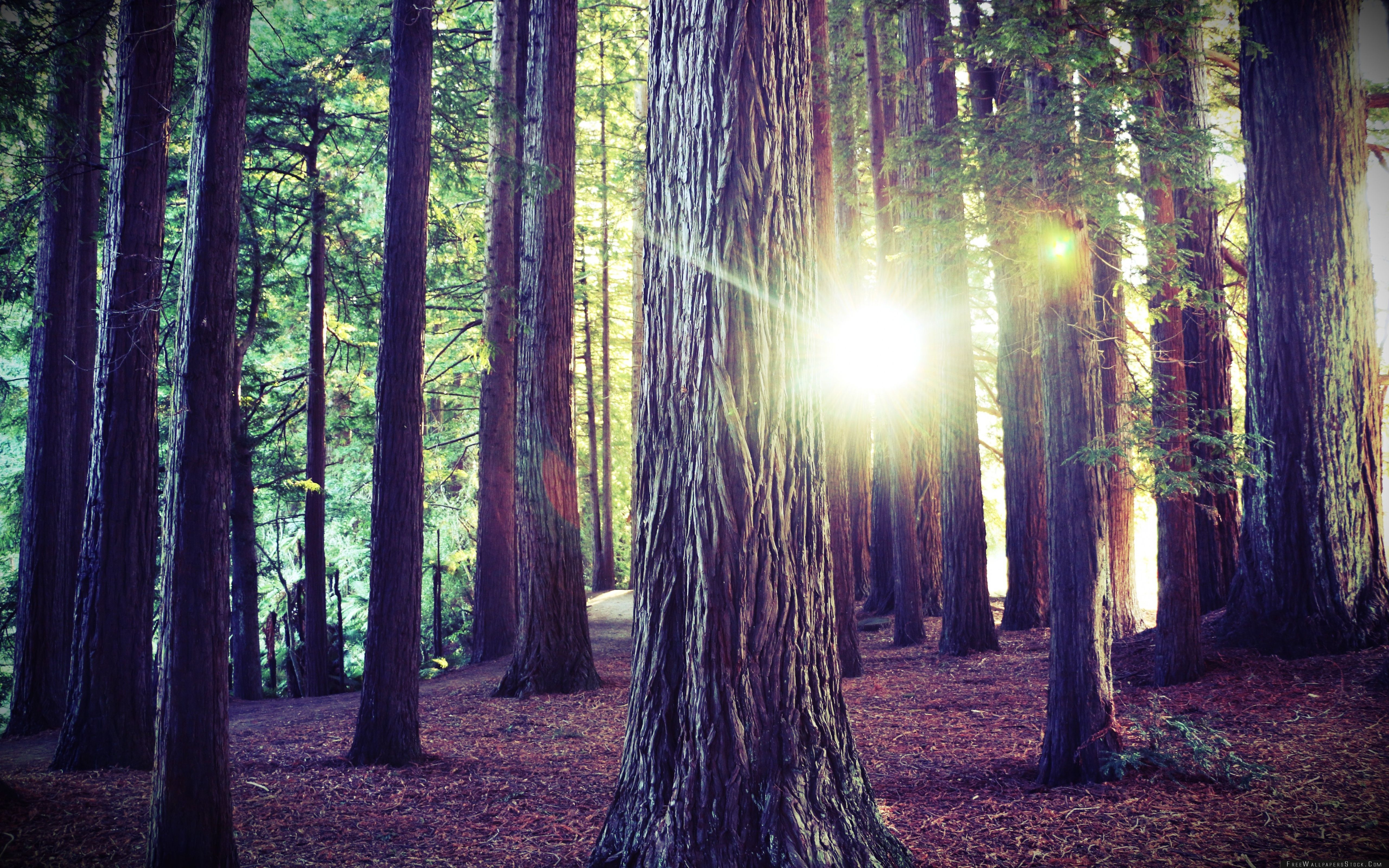 Download Free Wallpaper Woods Forest Nature
