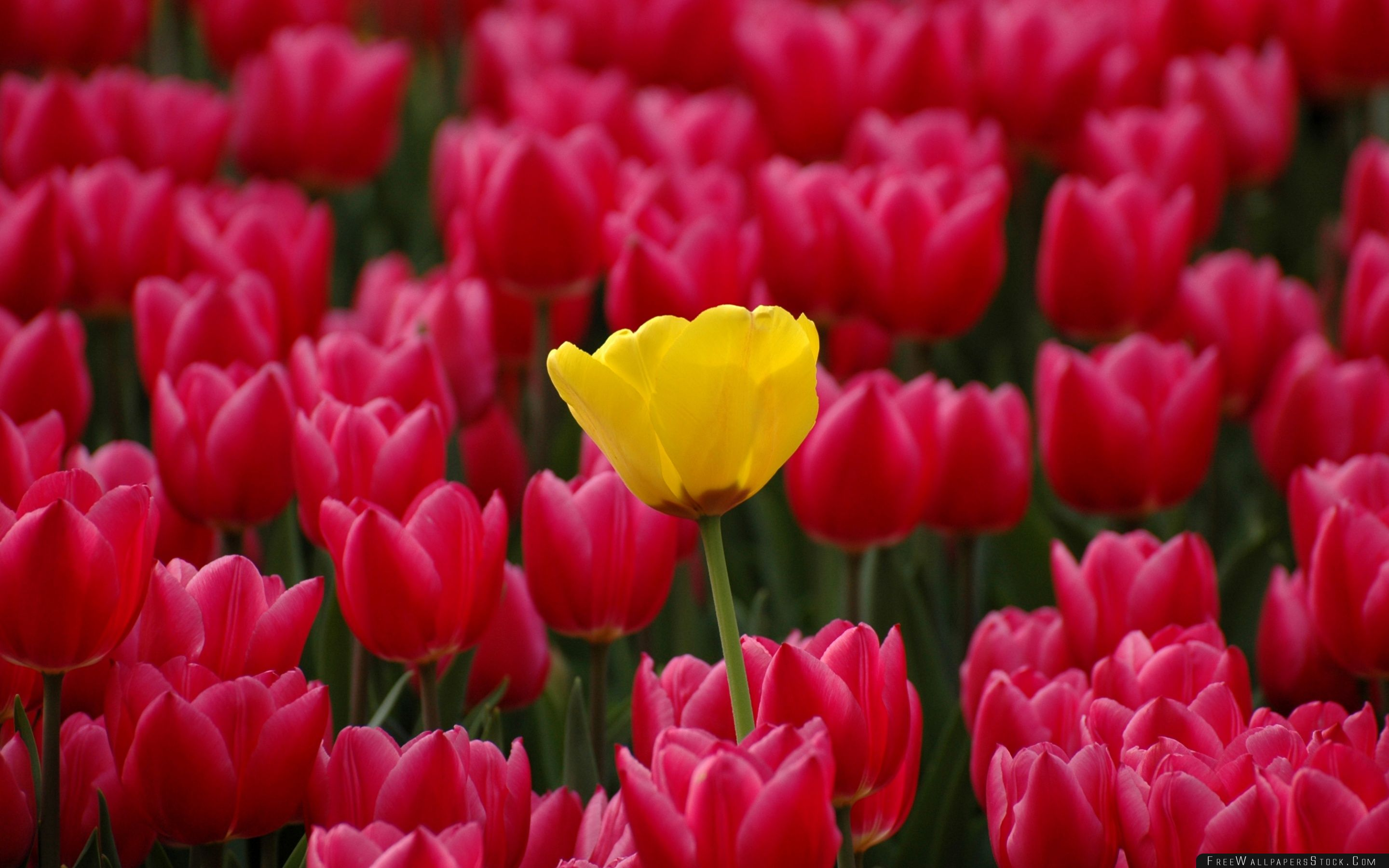 Download Free Wallpaper Yellow Among Red