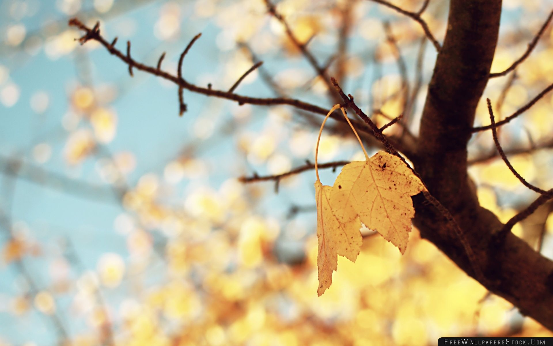 Download Free Wallpaper Yellow Autumn