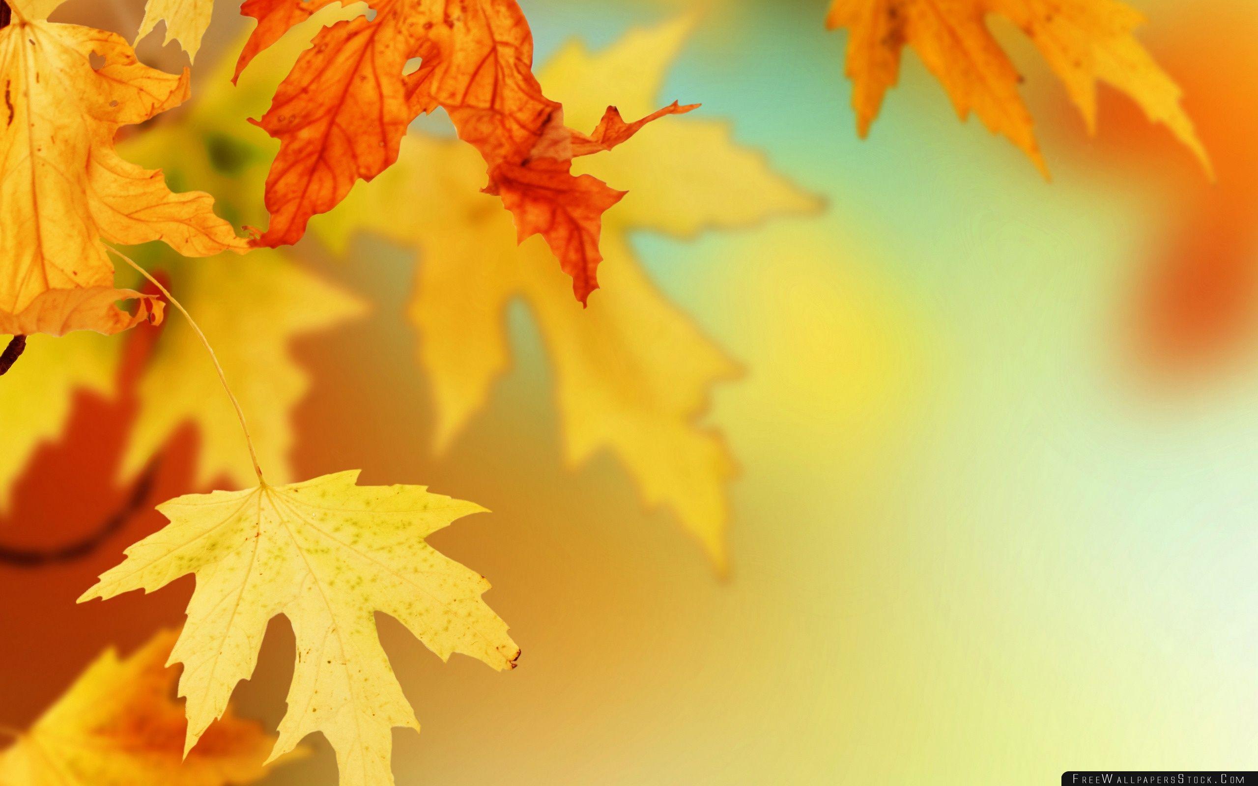 Download Free Wallpaper Yellow Autumn Leaves Macro
