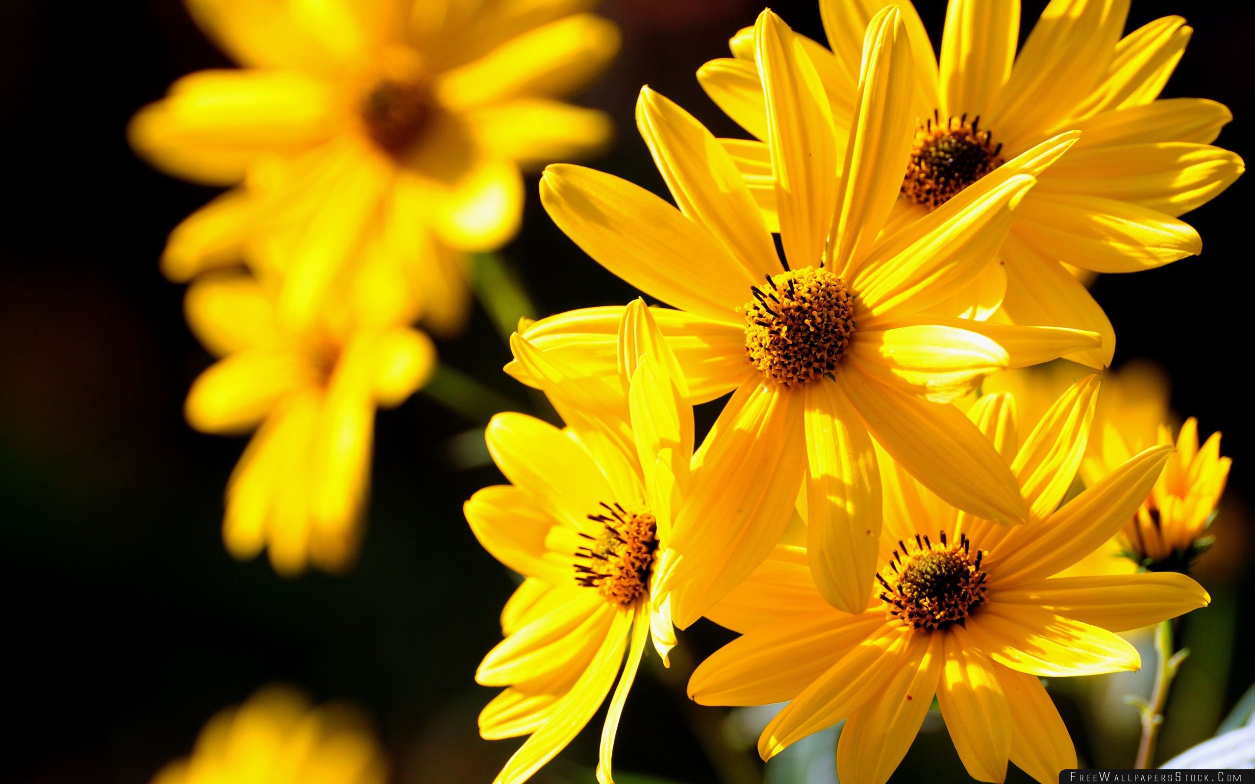Download Free Wallpaper Yellow Flowers Close