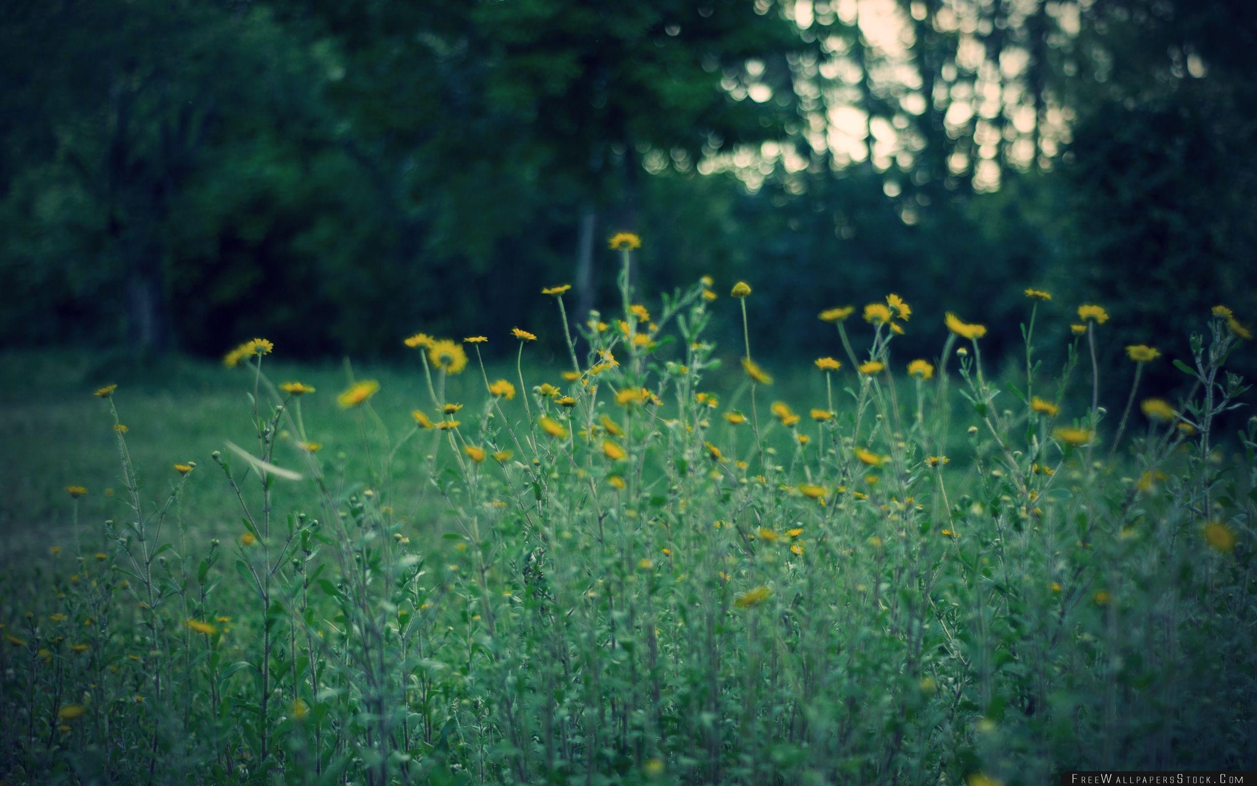 Download Free Wallpaper Yellow Flowers Dusk
