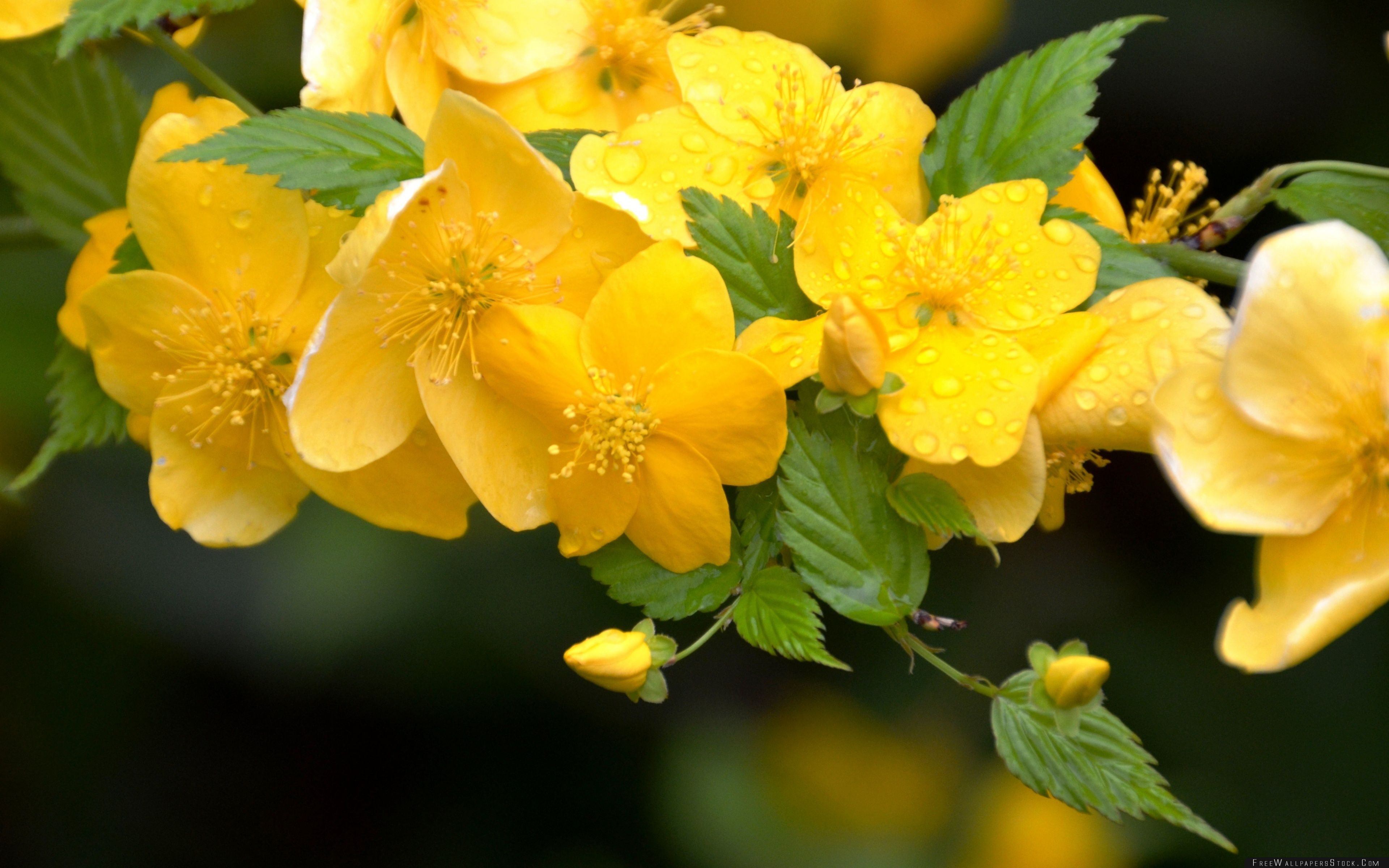 Download Free Wallpaper Yellow Flowers   Branches