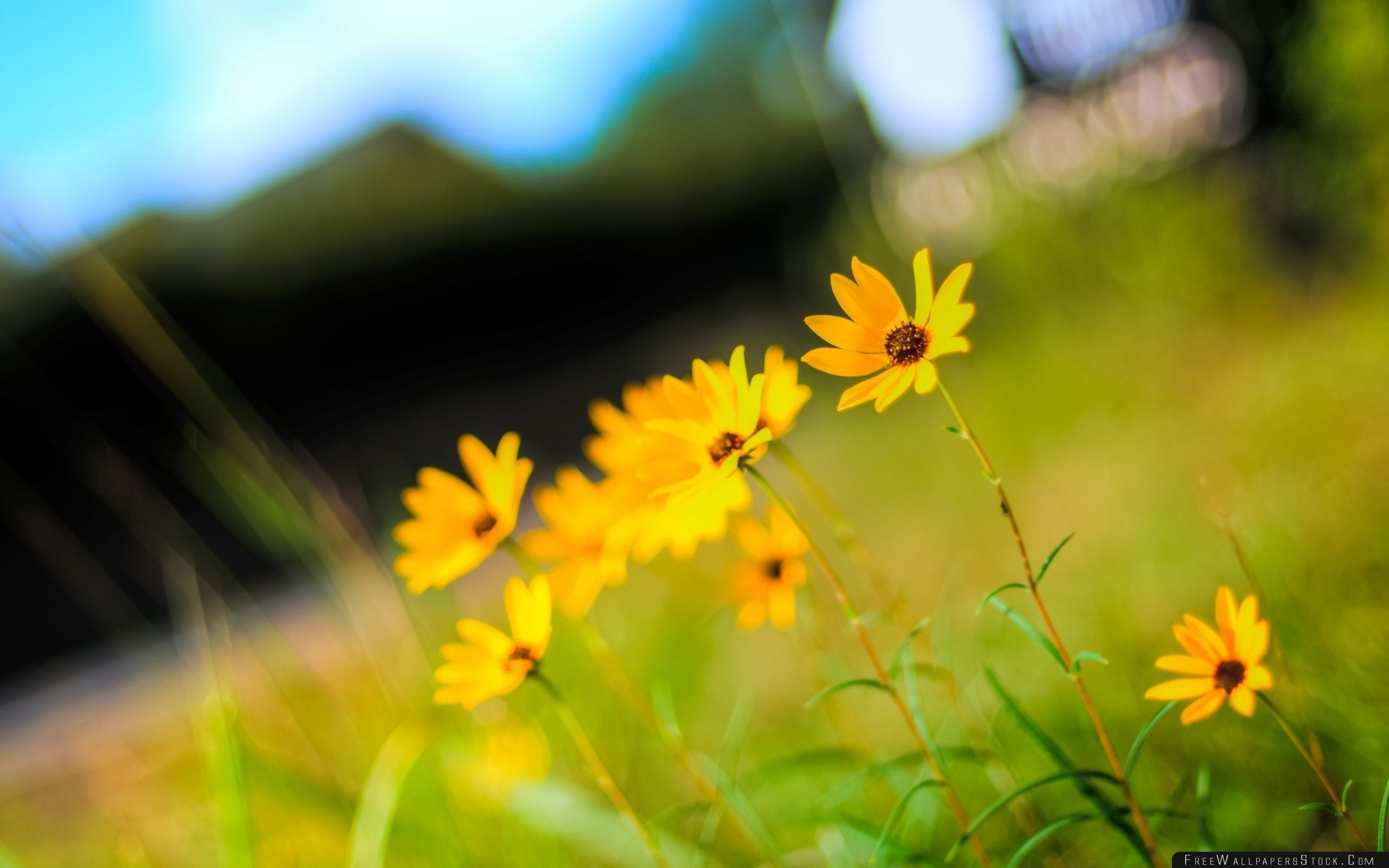 Download Free Wallpaper Yellow Flowers Photo
