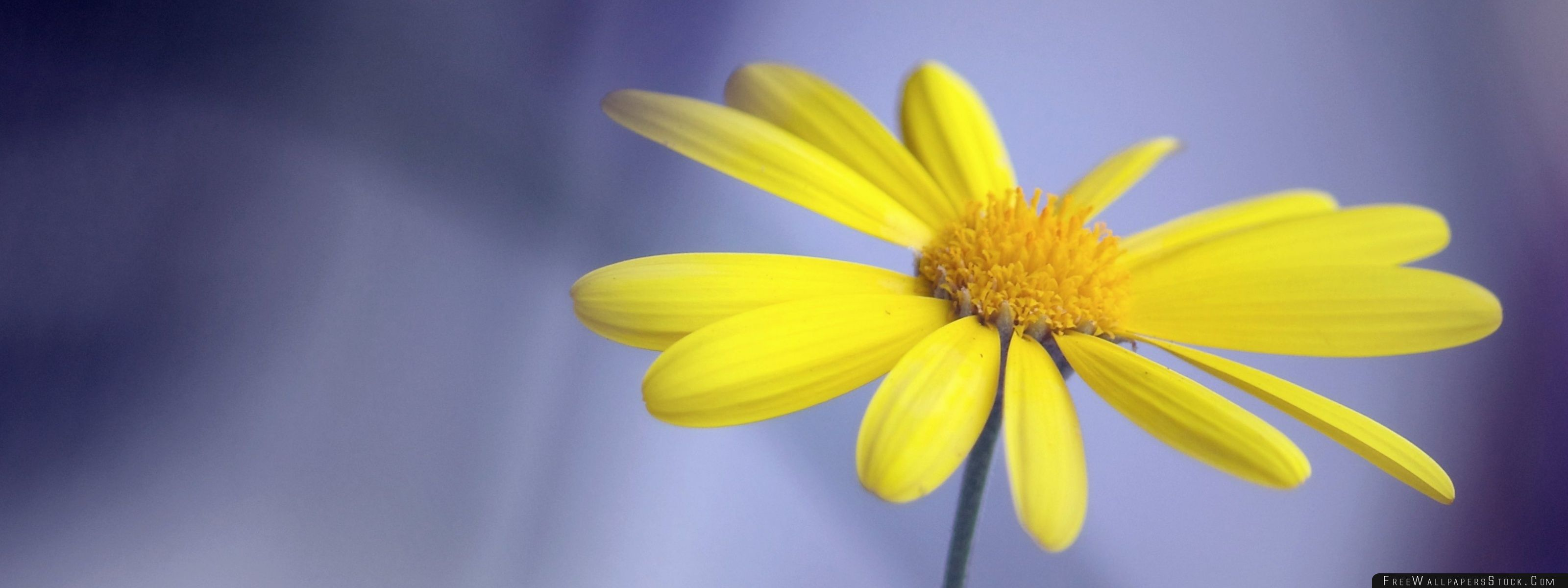 Download Free Wallpaper Yellow Flower With Stem