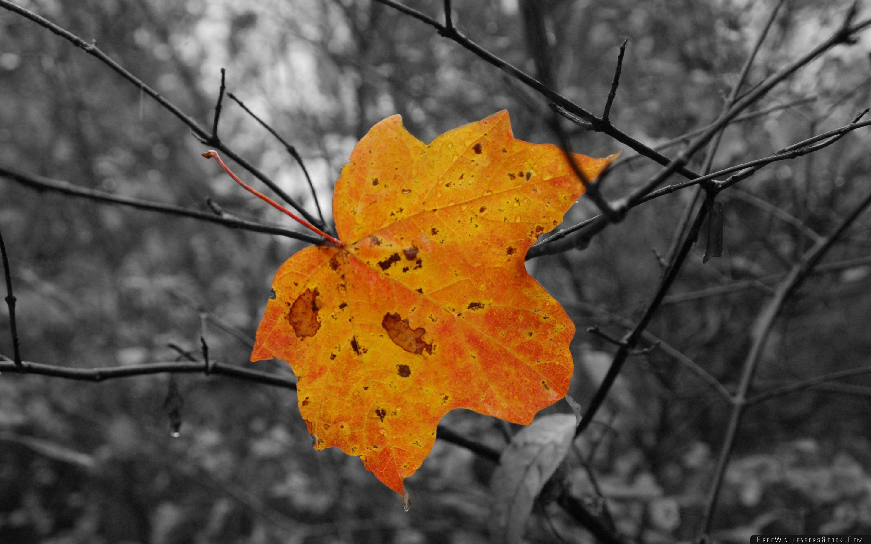 Download Free Wallpaper Yellow Leaf