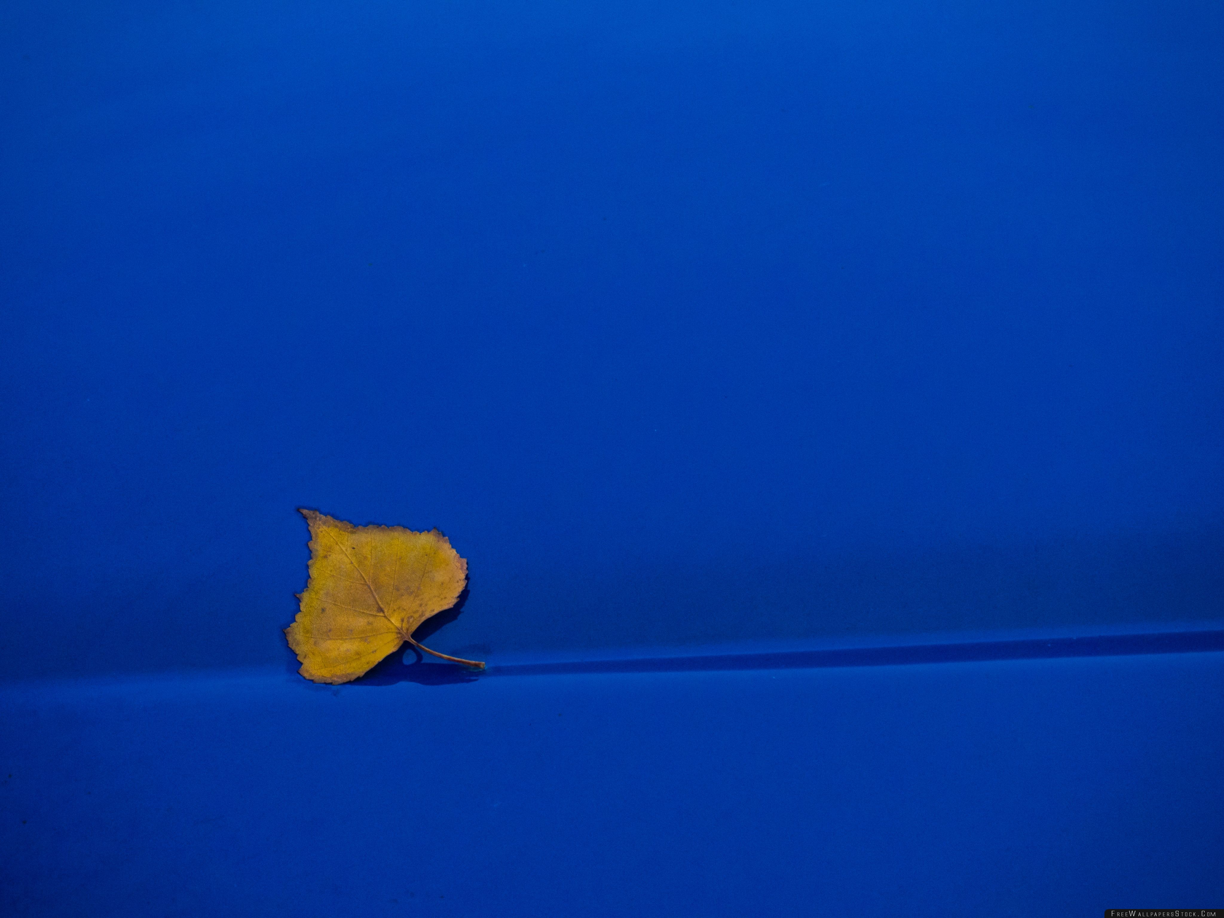 Download Free Wallpaper Yellow Leaf   Blue Background