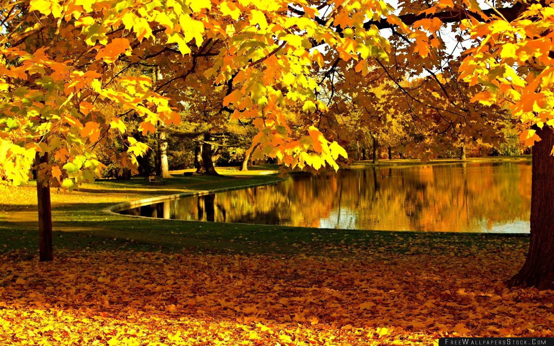 Download Free Wallpaper Yellow Leaves   Park Pond Autumn