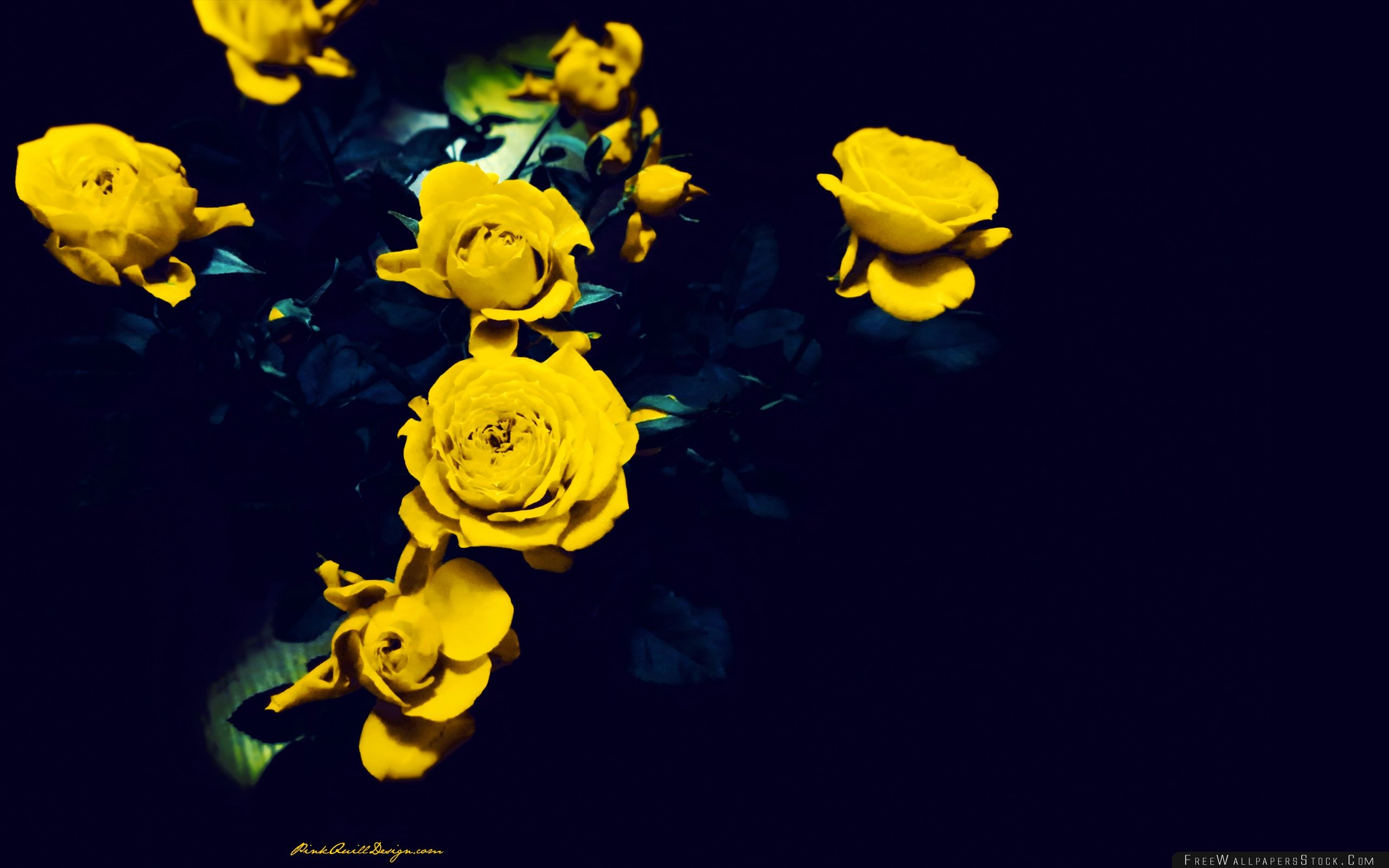 Download Free Wallpaper Yellow Roses
