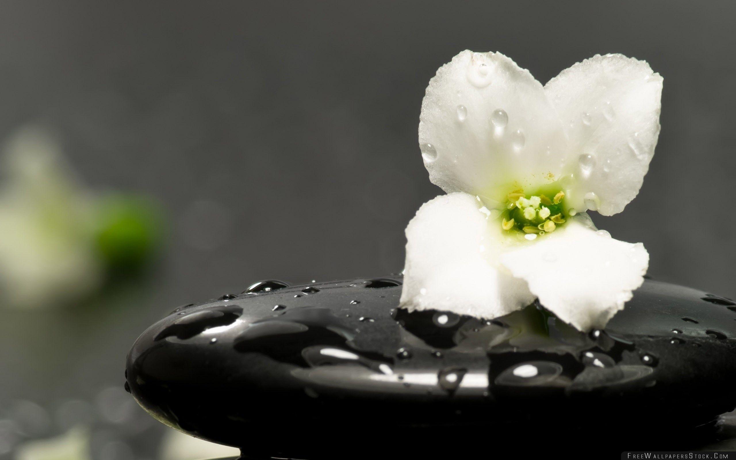 Download Free Wallpaper Zen Stones And Flower