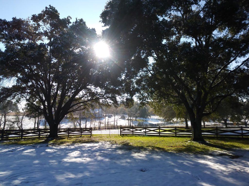 Snow Morning 2