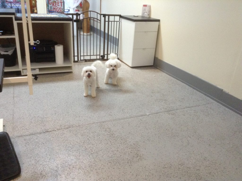 SG white dogs after